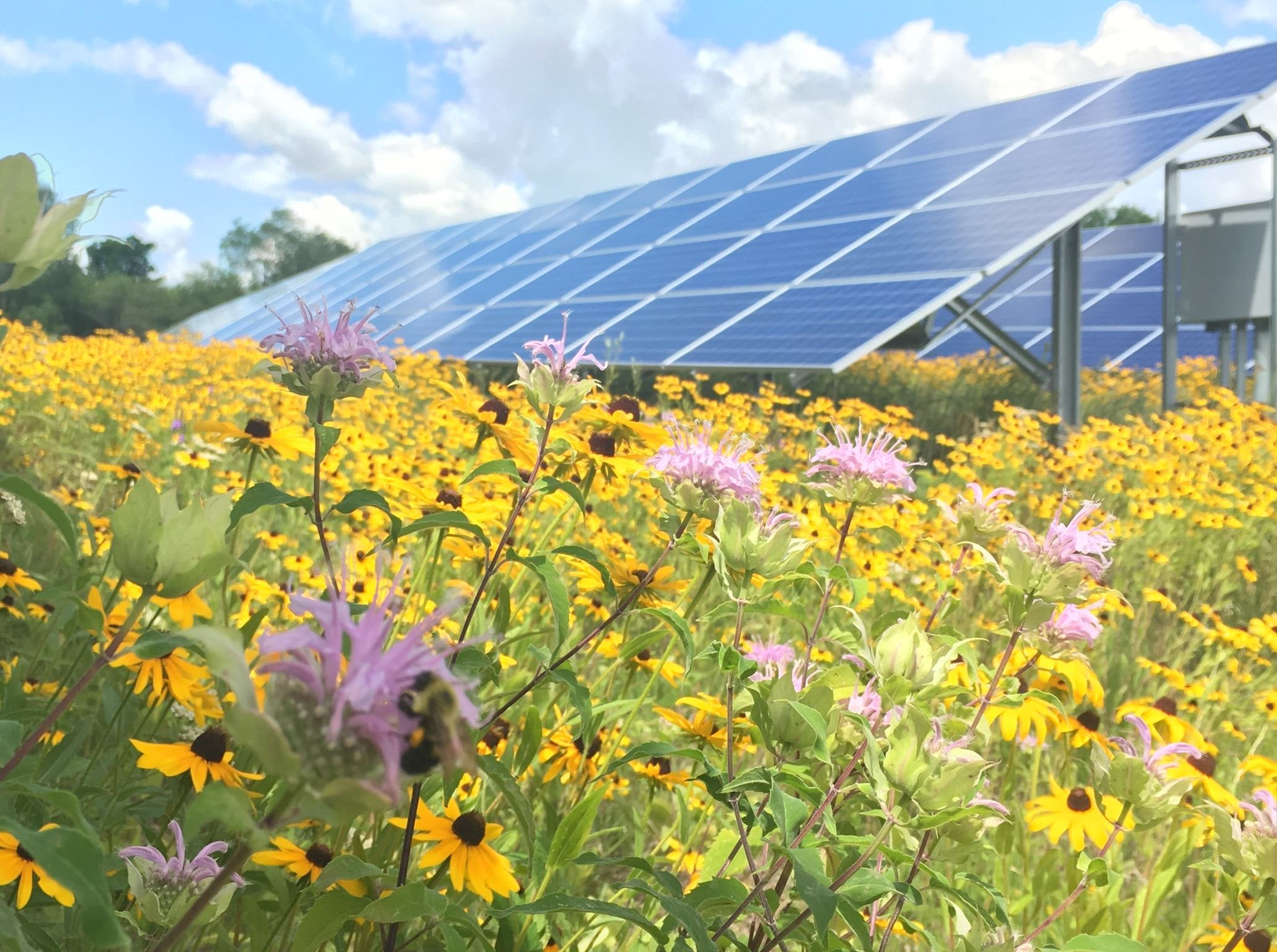 MARYLAND IS PAVING THE WAY FOR COMMERCIAL SOLAR POWER PLANTS TO BECOME POLLINATOR FRIENDLY -