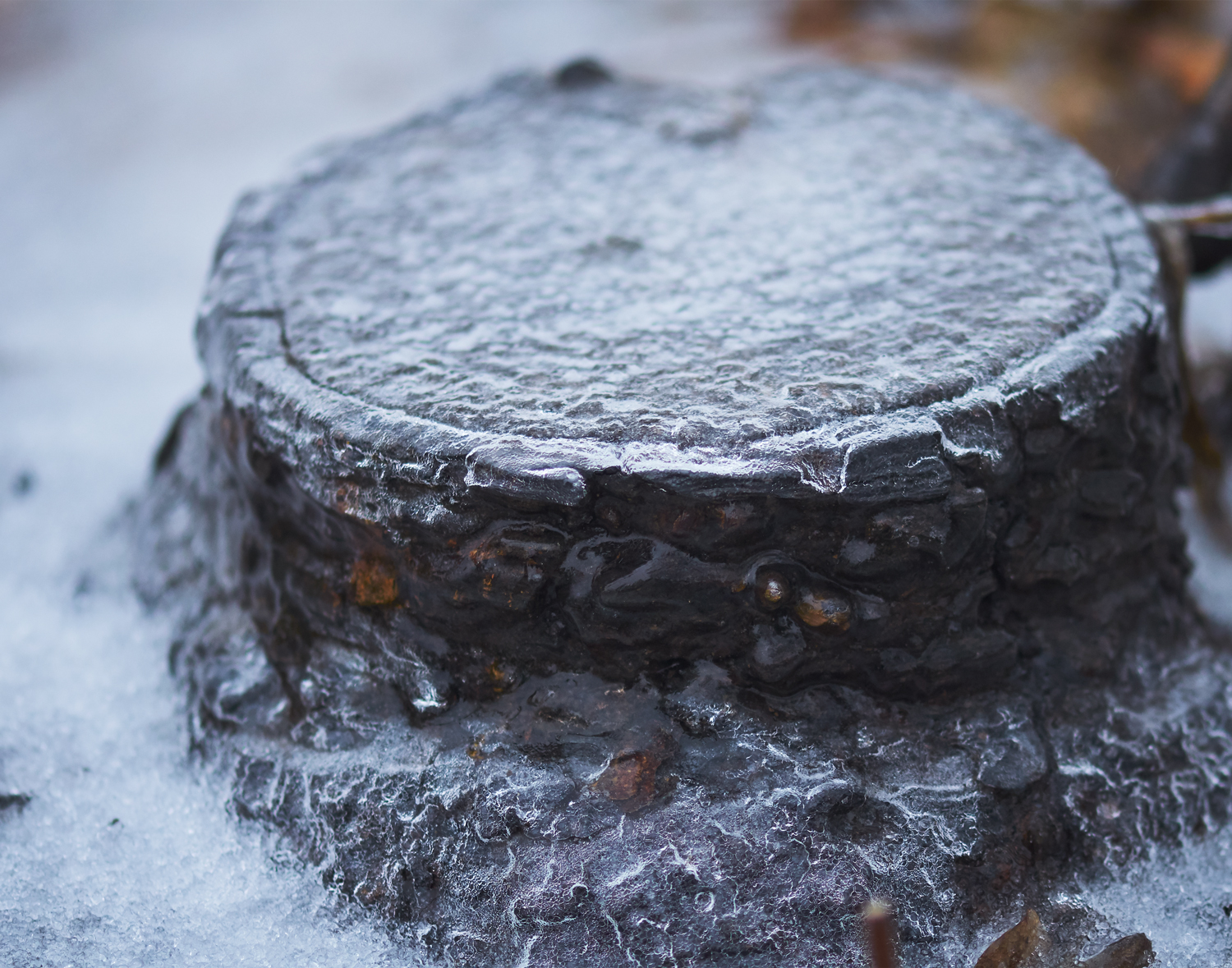 Ice Covered Stump