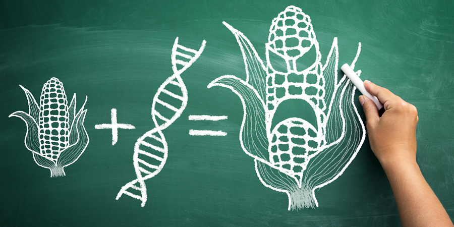 gmo-vs-non-gmo-GMOs-are-really-bad-by-Dan-Purser-MD.jpg