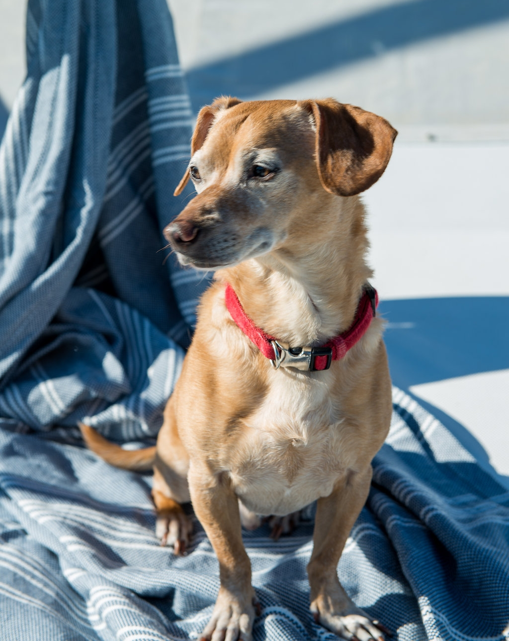 Moving & Living Aboard with a Dog -