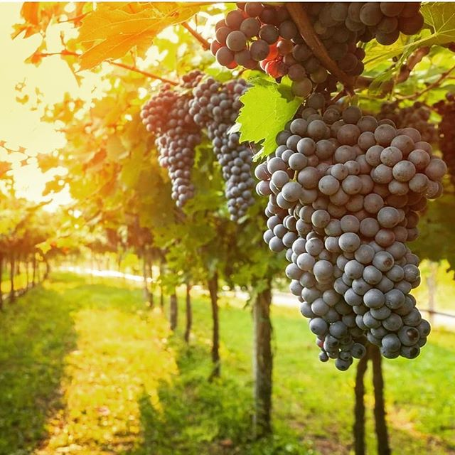 """In that day— """"Sing about a fruitful vineyard:  I, the Lord, watch over it;  I water it continually. I guard it day and night  so that no one may harm it. ~ Isaiah 27:2-3  Sundays 10AM midcityvineyardchurch.com"""