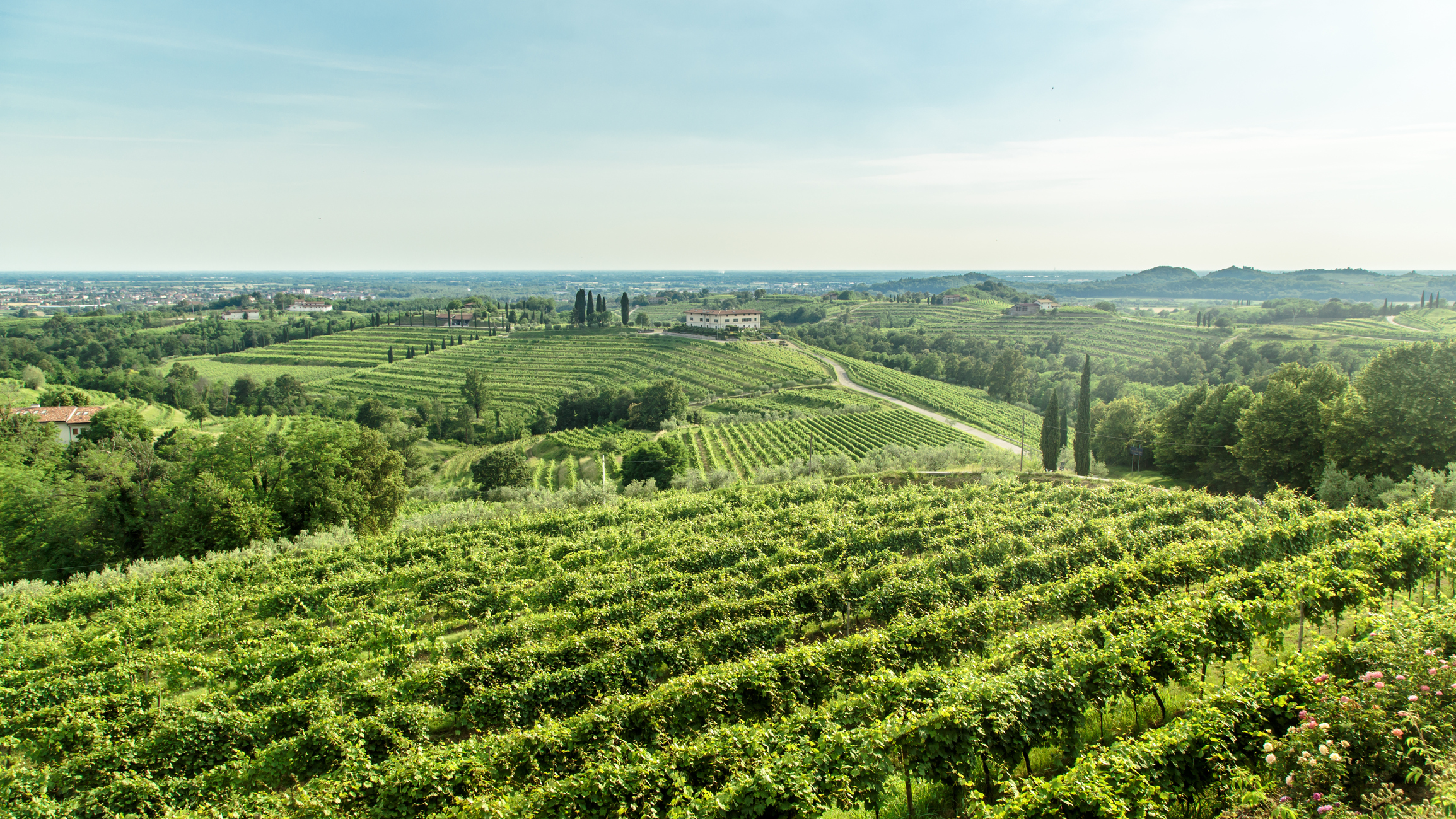 Fabulous wine and wine tasting opportunities