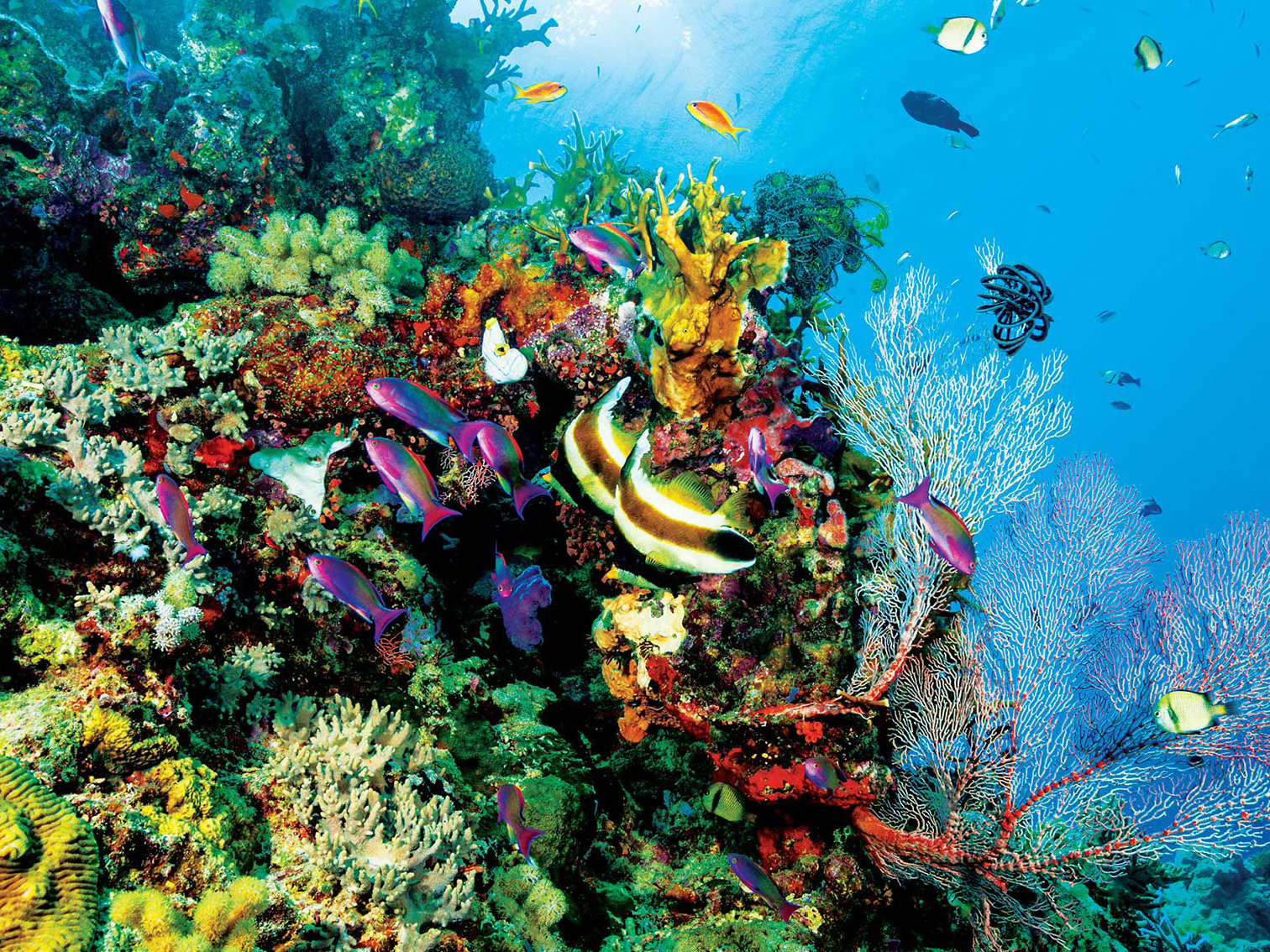 Coral_Reef_Handbook_Pages_Page_21.png