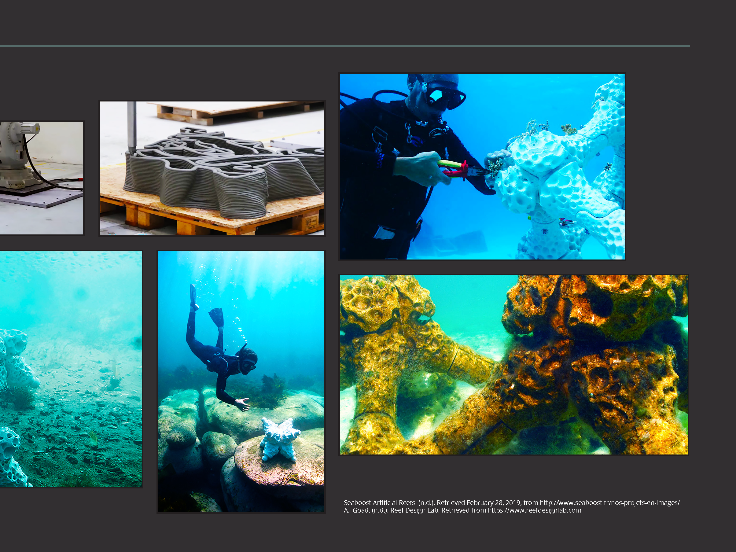 Coral_Reef_Handbook_Pages_Page_19.png