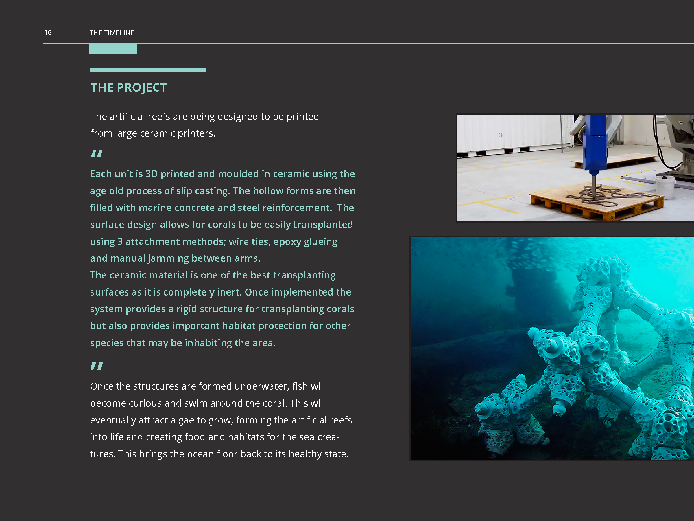 Coral_Reef_Handbook_Pages_Page_18.png