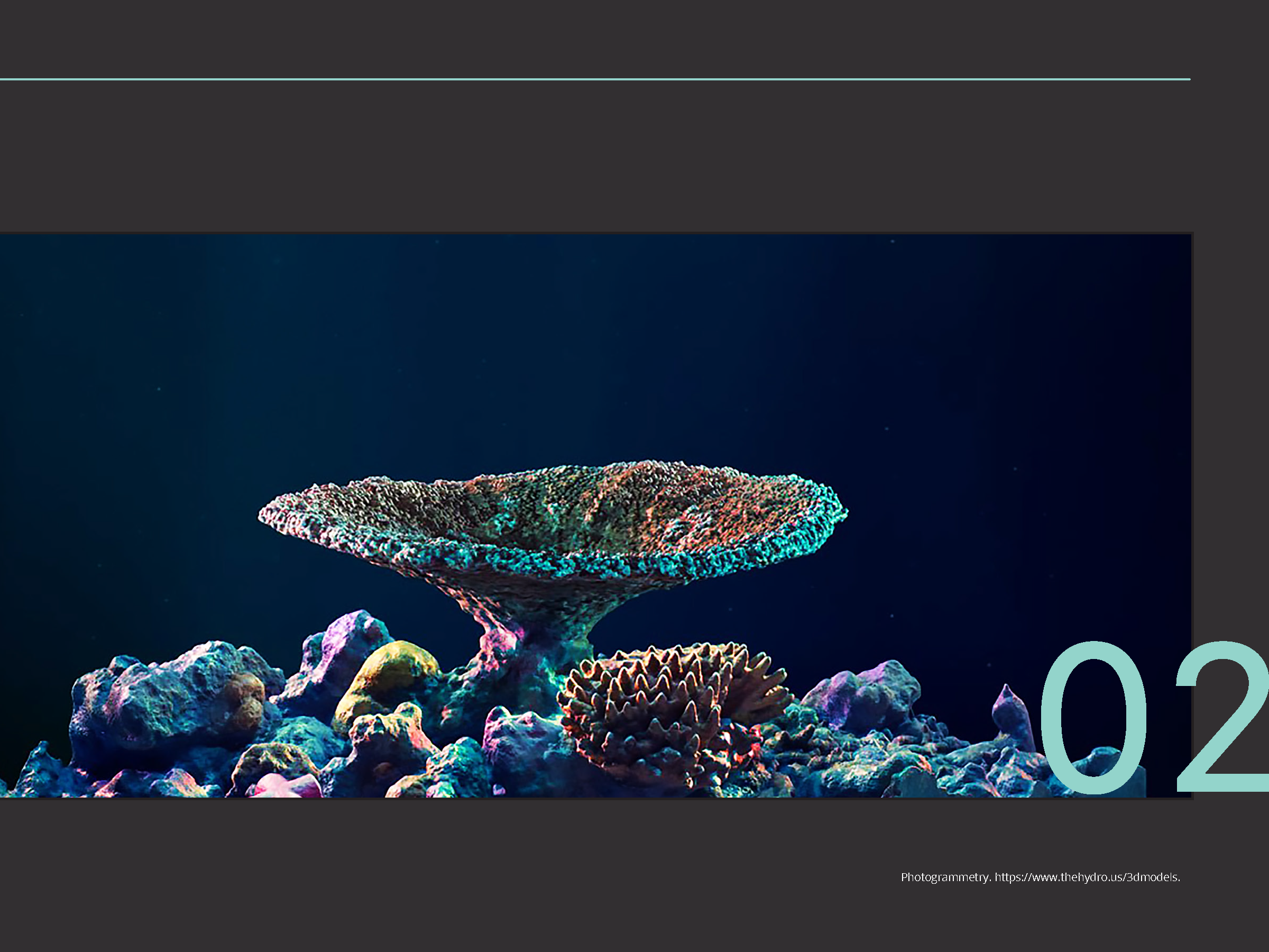 Coral_Reef_Handbook_Pages_Page_07.png
