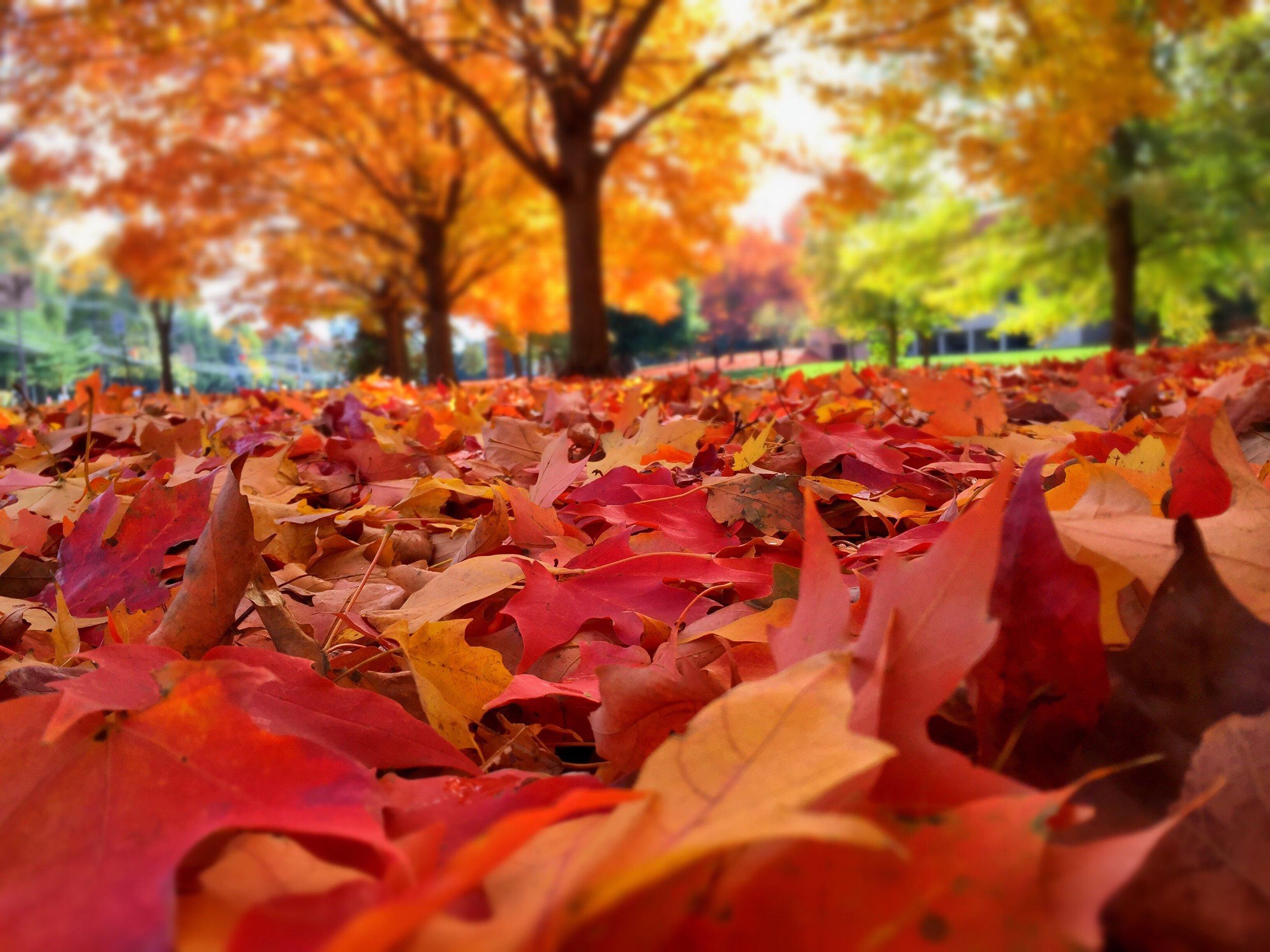 tree-fall.jpg