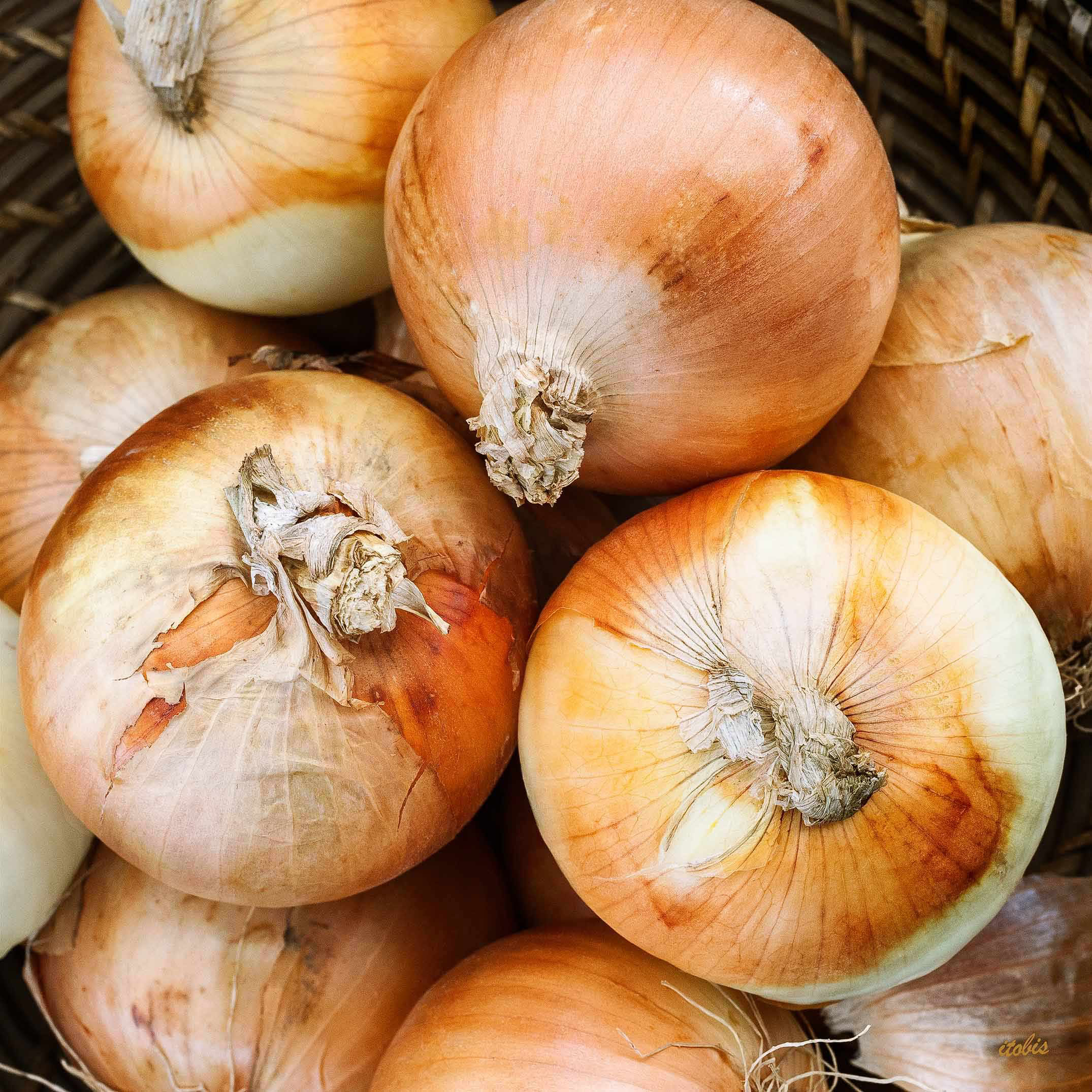 Onions At The Market - Luxy Farm - Ottawa Farmers' Market, Lansdowne Park - photo by Irene Tobis