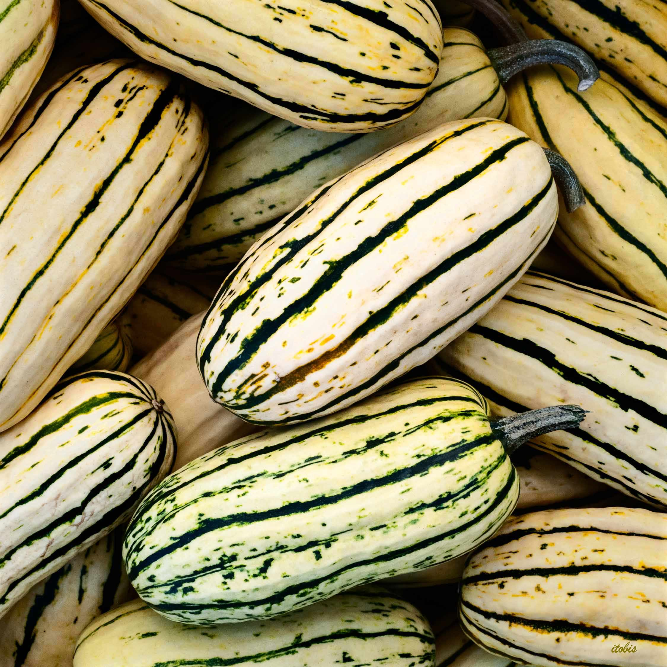 KITCHEN PHOTO BOARD : Delicata Squash - Luxy Farm - Ottawa Farmers' Market, Lansdowne Park - photo by Irene Tobis