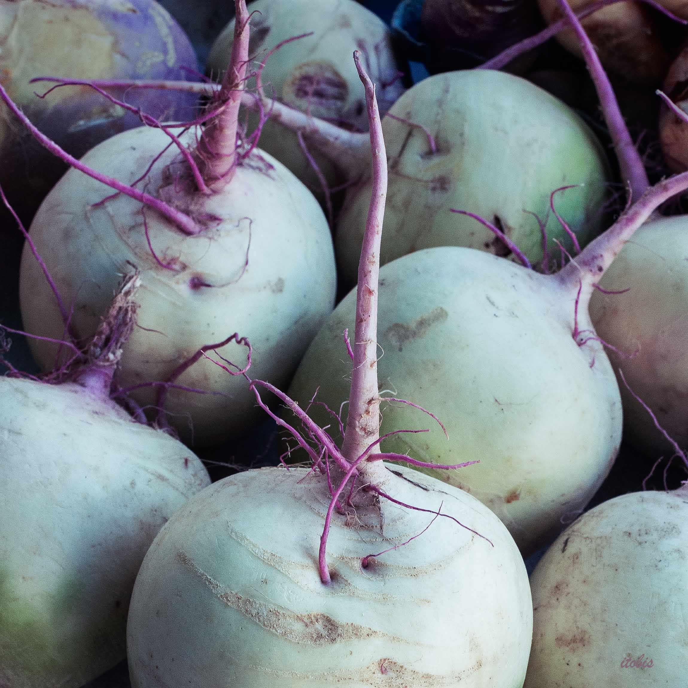 Wradish-Waratah