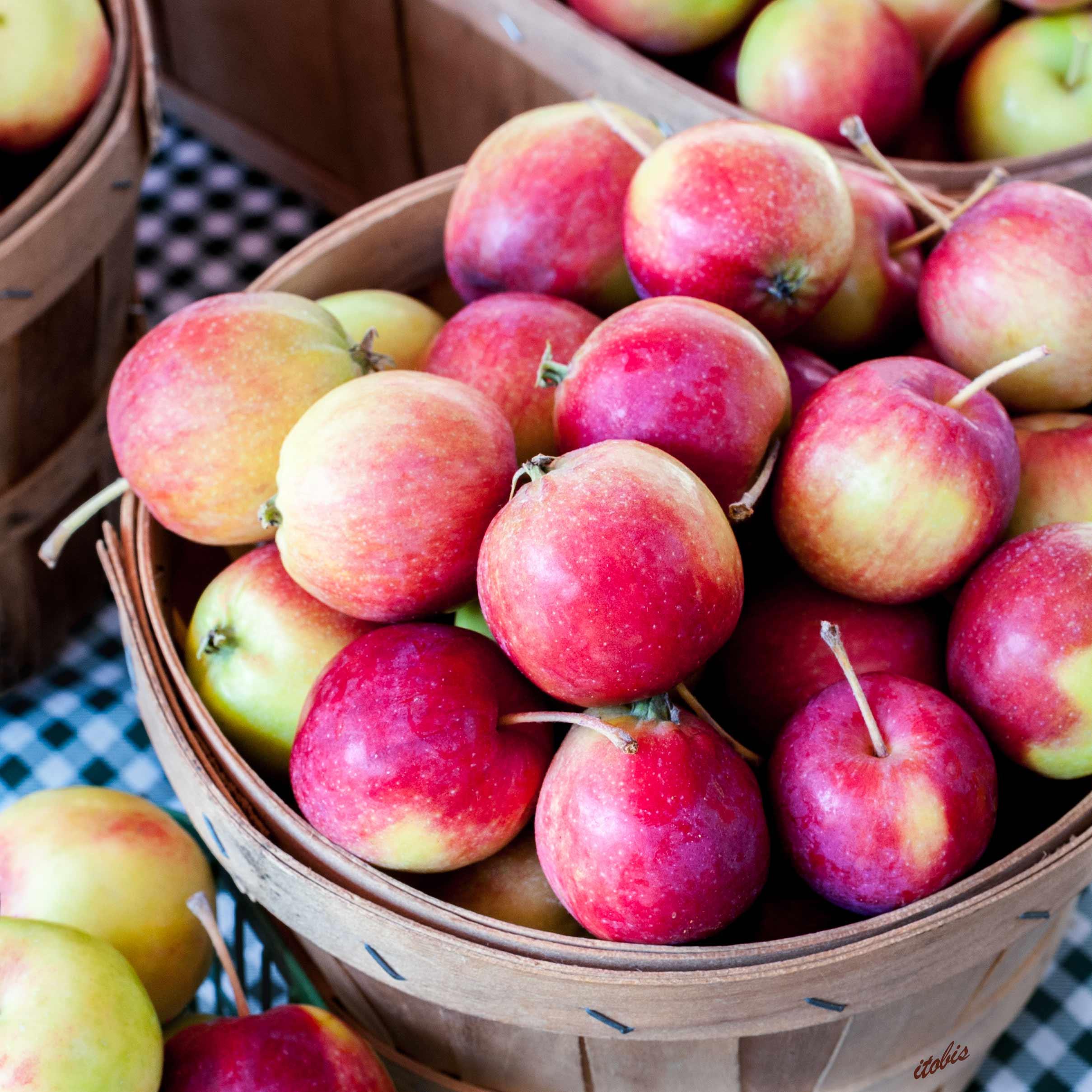 KITCHEN PHOTO BOARD : Crabapples at the Market - Hall's Apple Market - Ottawa Farmers' Market, Lansdowne Park - photo by Irene Tobis