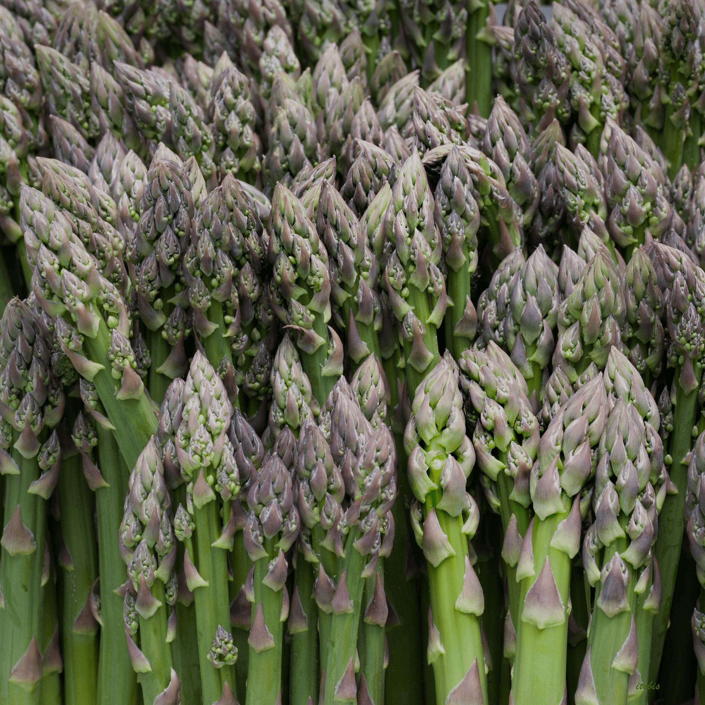 Asparagus at the Market - Rochon Garden - Ottawa Farmers' Market, Lansdowne Park, Ottawa, Ontario - photo by Irene Tobis