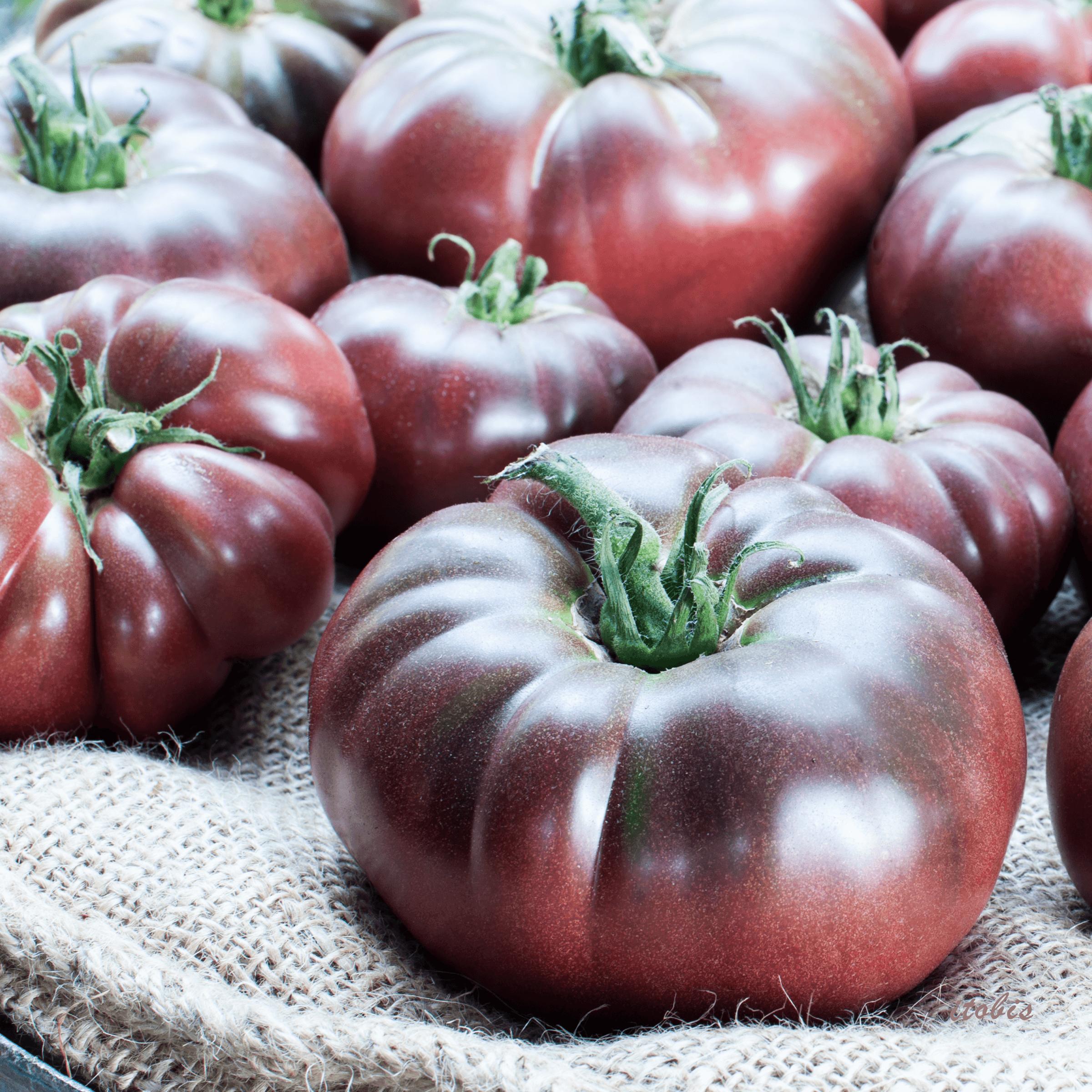 Tomatoes at the Market - Bramble Lea Farm - Beechwood Farmers' Market, Ottawa, Ontario - photo by Irene Tobis