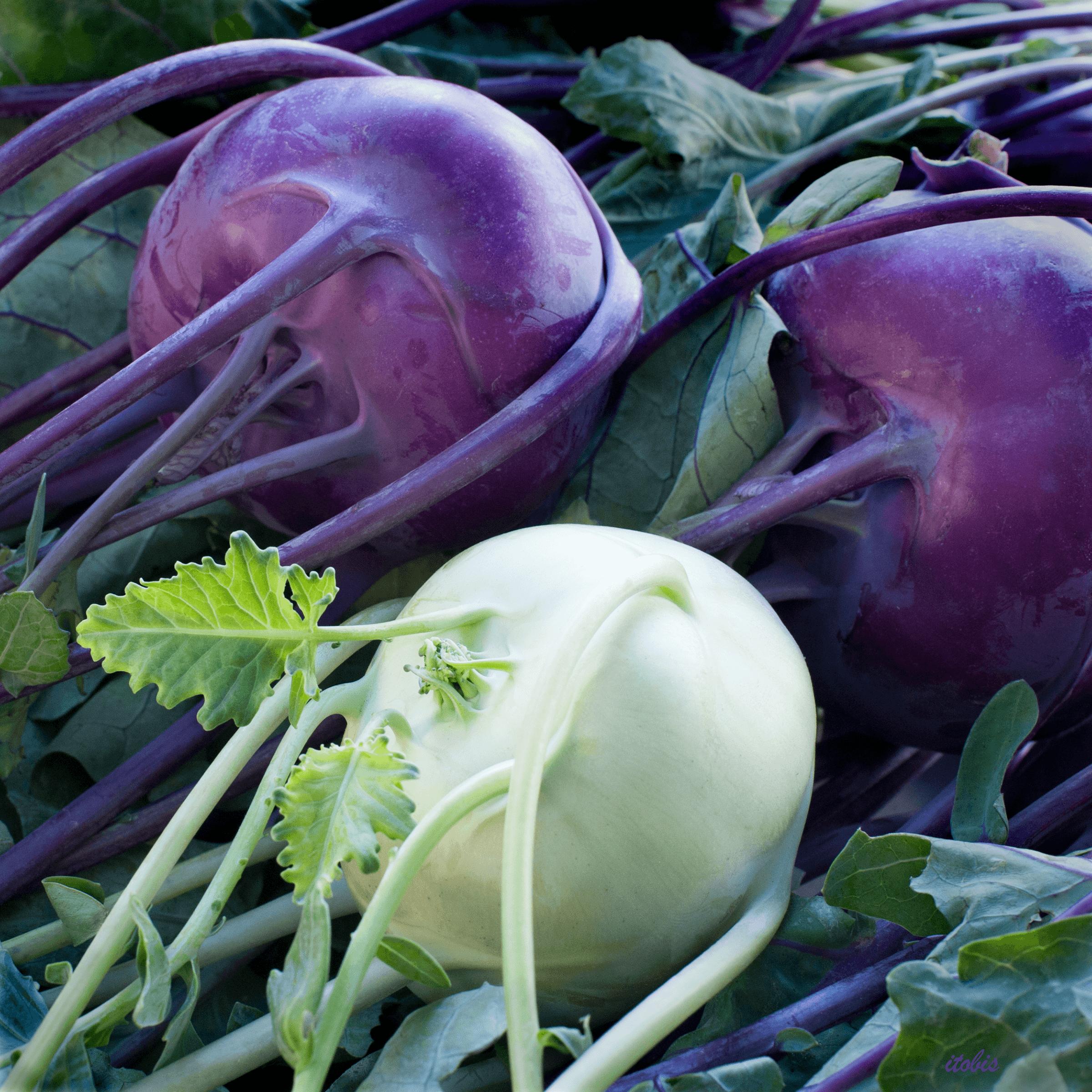 Kohlrabi at the Market - Allium Farm - Beechwood Farmers' Market, Ottawa, Ontario - photo by Irene Tobis