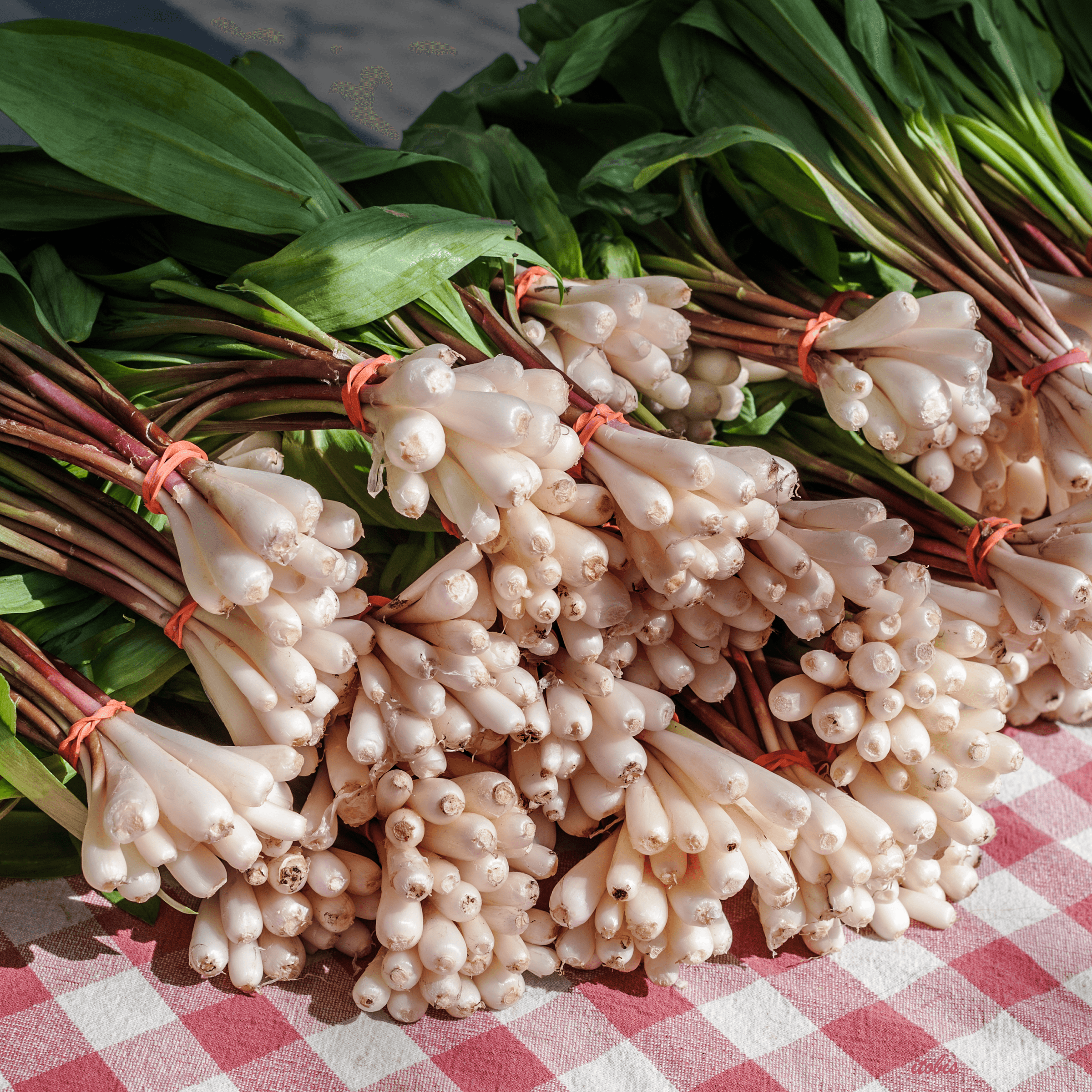Wild Garlic at the Market - Just Farms - Ottawa Farmers' Market, Lansdowne Park, Ottawa, Ontario - photo by Irene Tobis