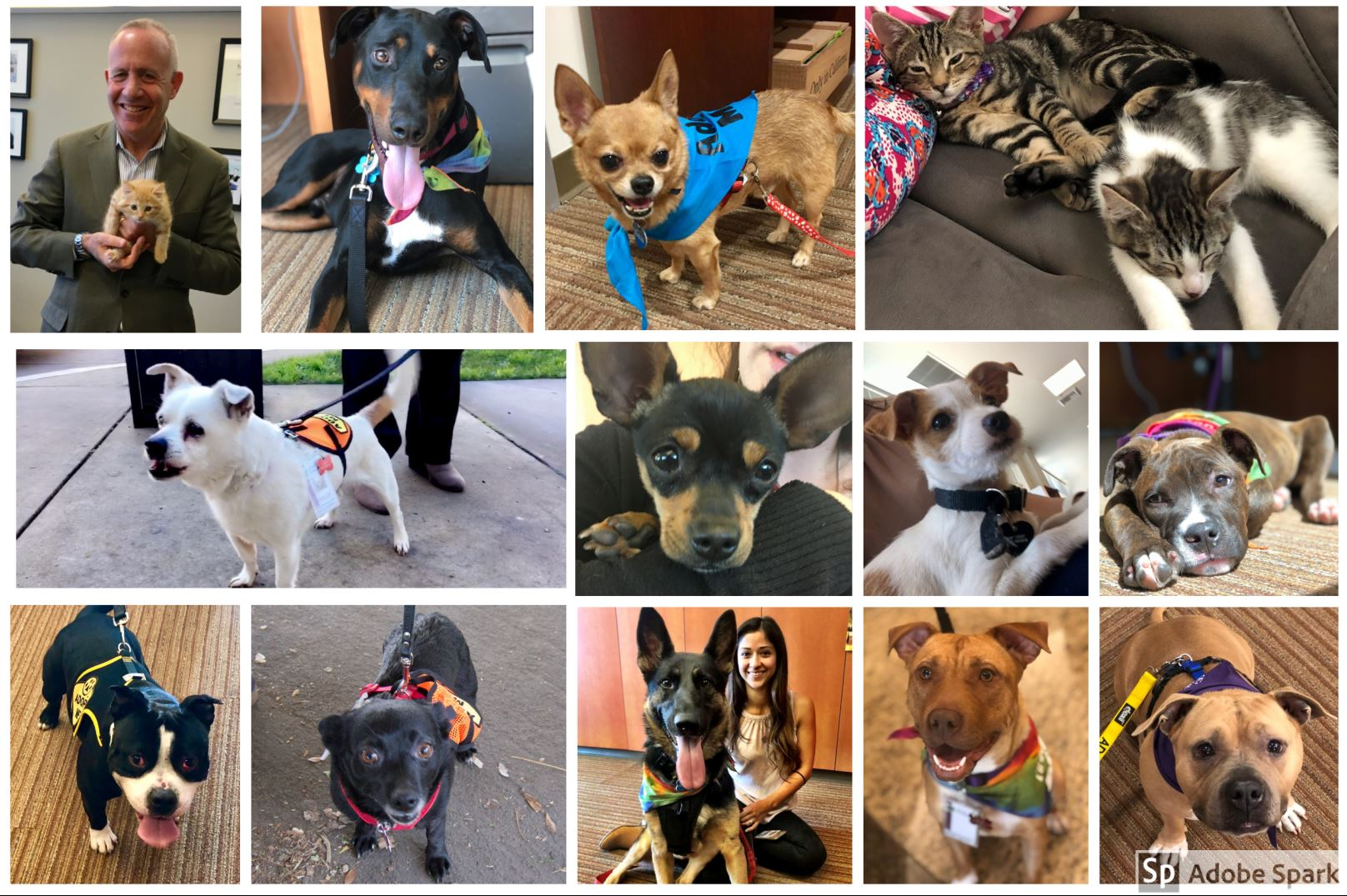 shelter pets 2018.JPG