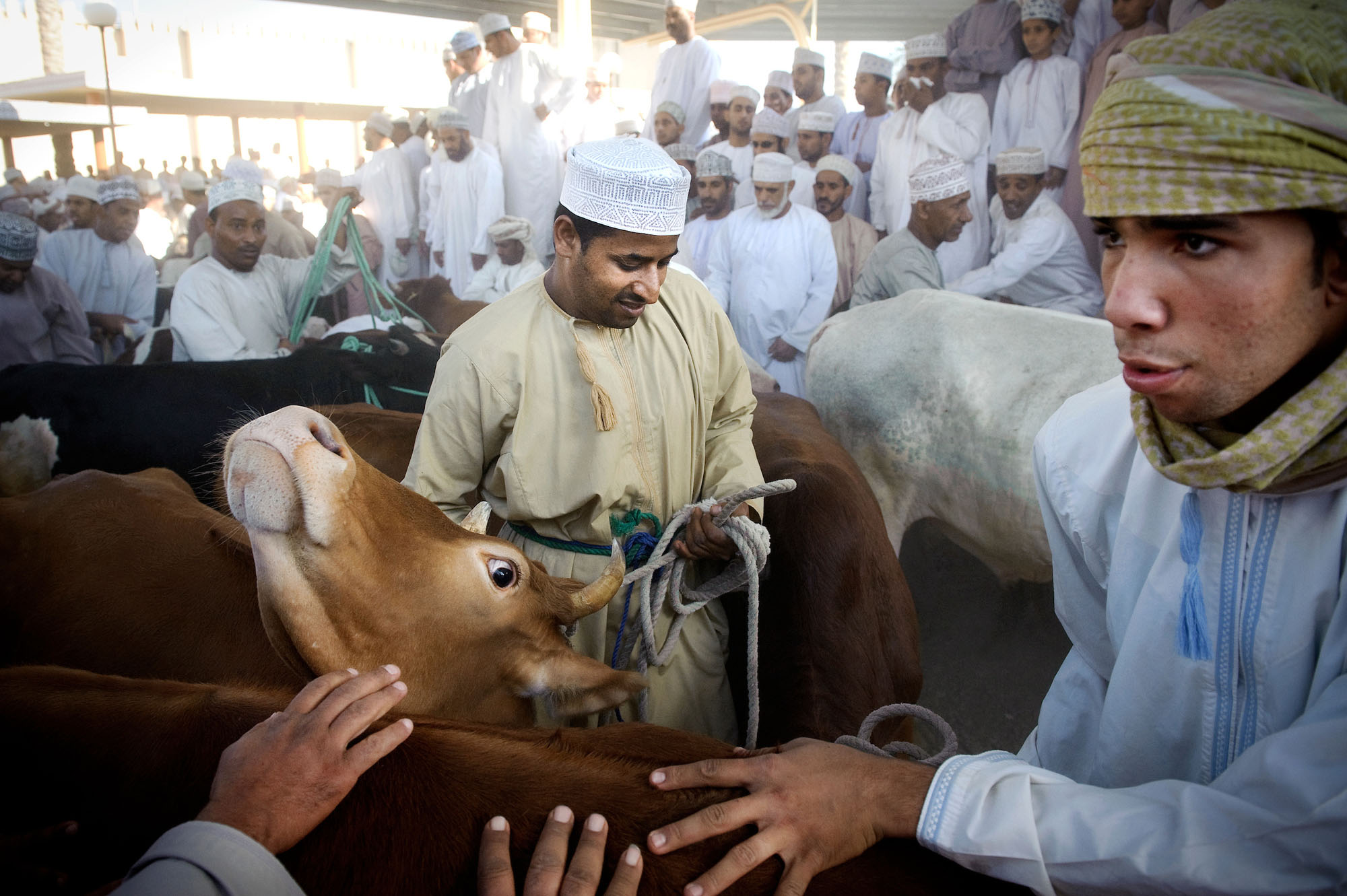 Animal market in Nizwa city - Oman