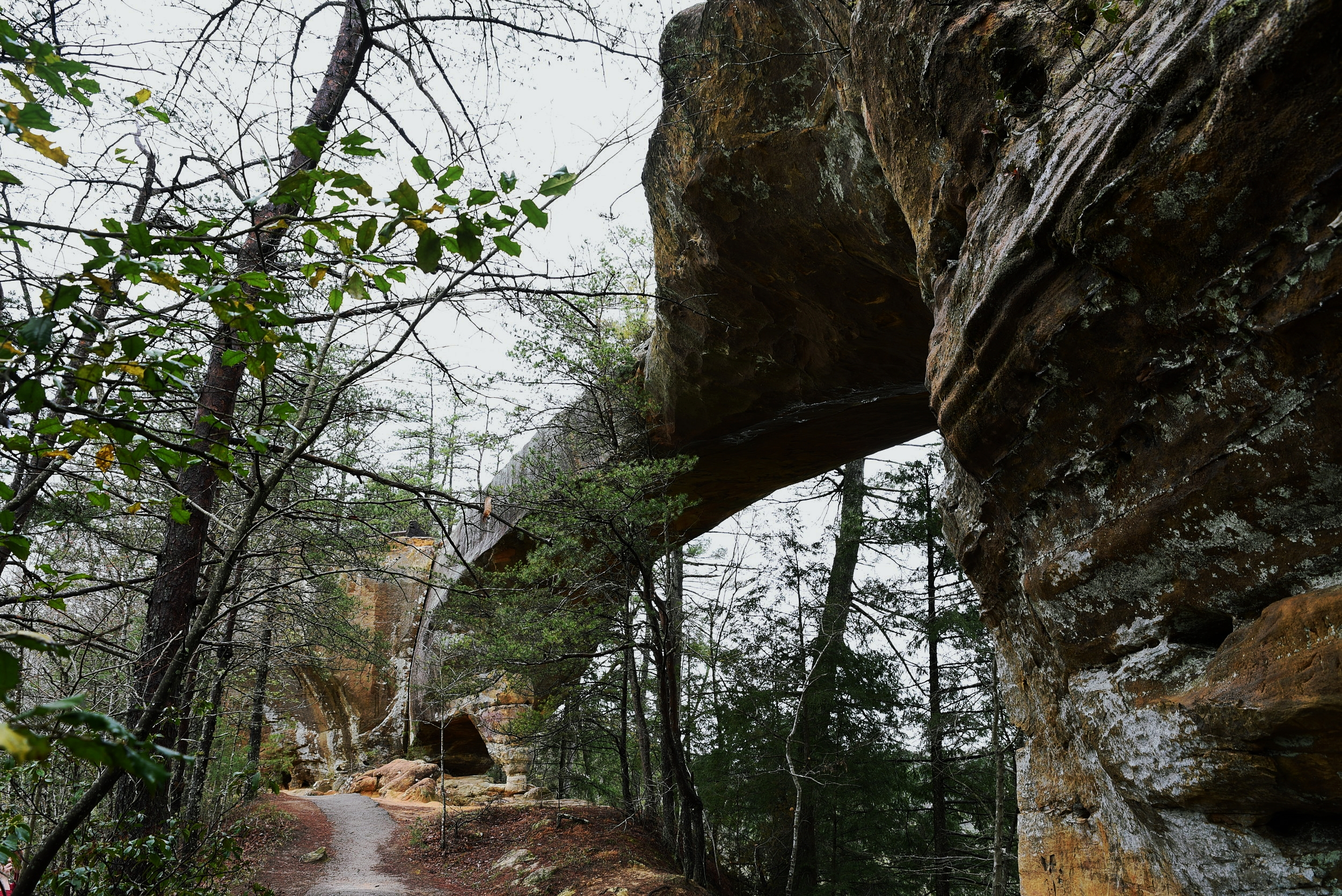 The natural sandstone arches and rock formations in Kentucky were a huge surprise to us.
