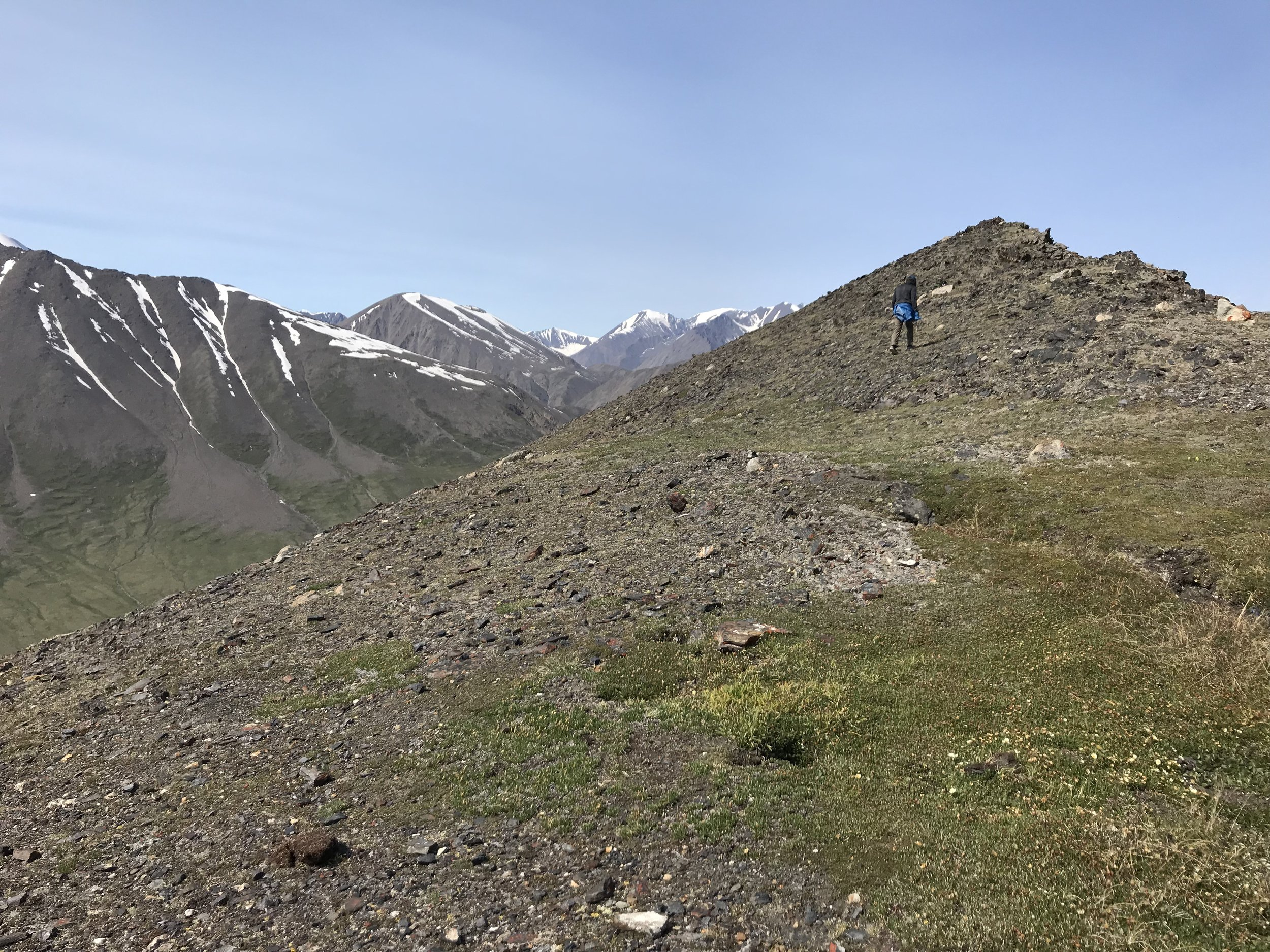 Walking once above the saddle is a lot less steep, but there is no game trail to follow.