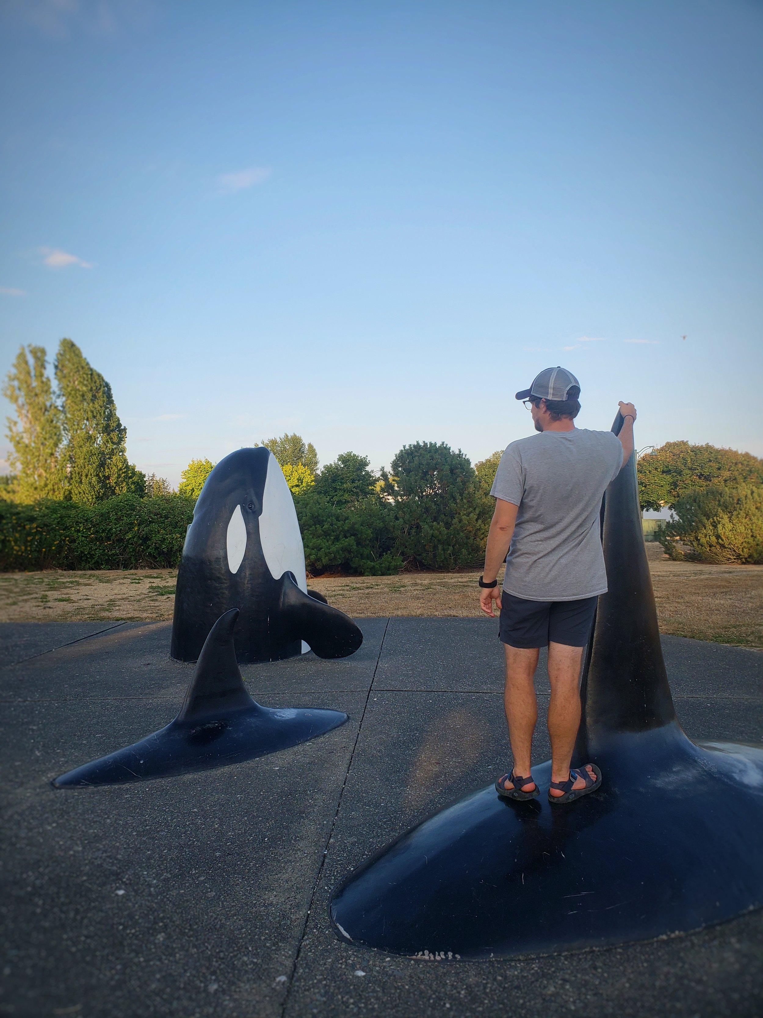 Orca sculptures in Blaine Marine Park.
