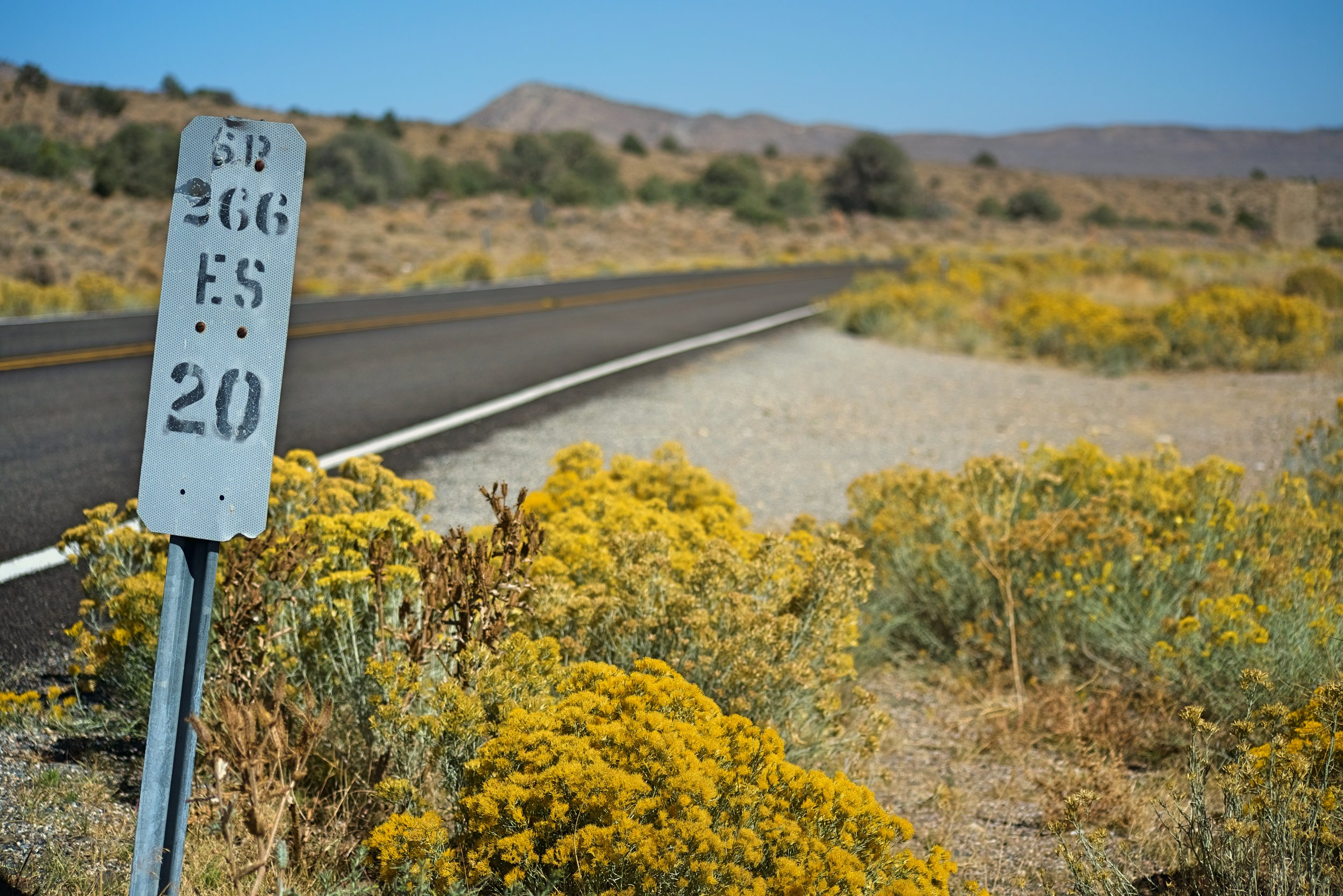 The rabbit brush was blooming while we were traveling through this area of Nevada.