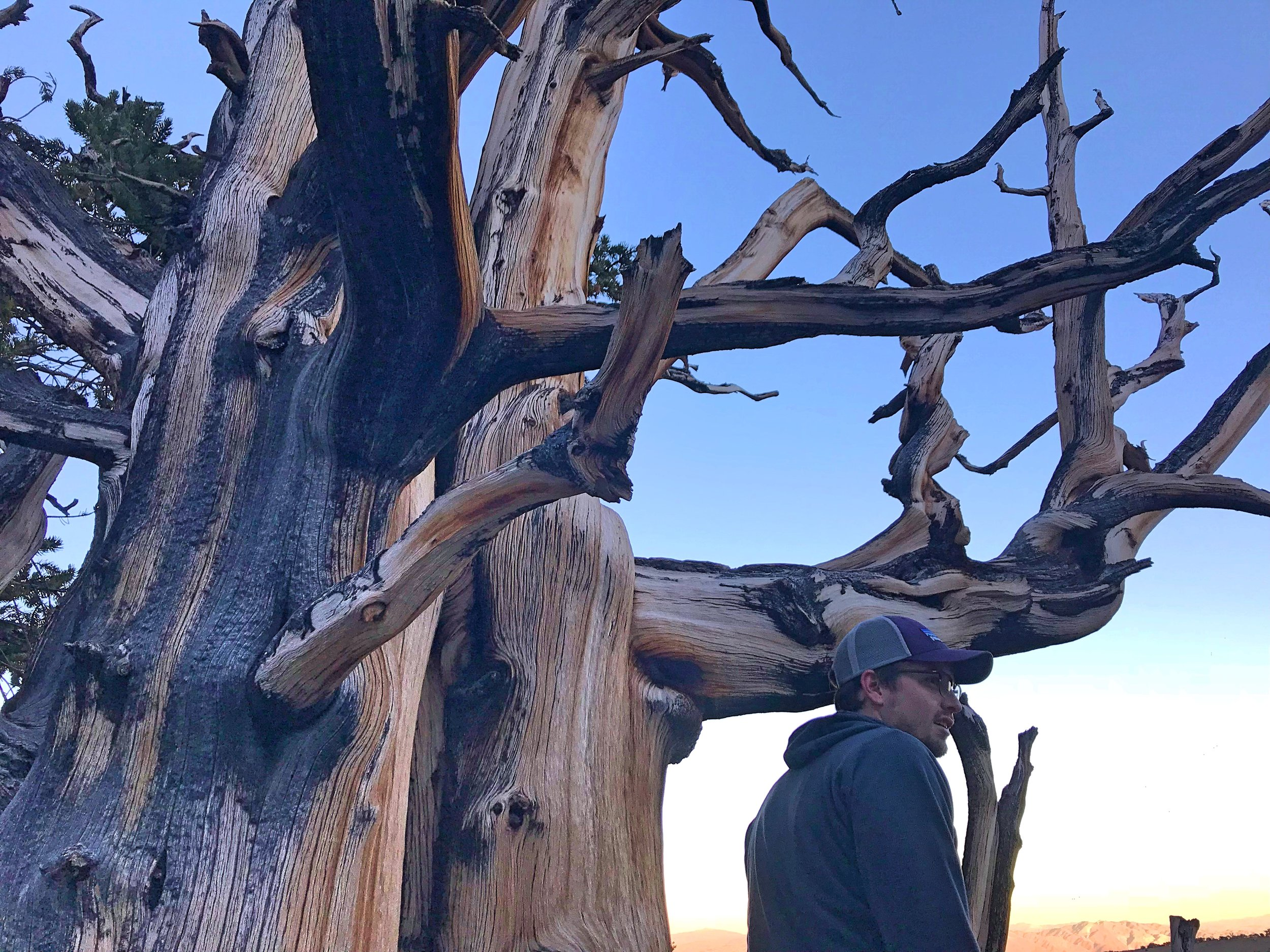 Ian standing by a tree that has lost all of its bark.