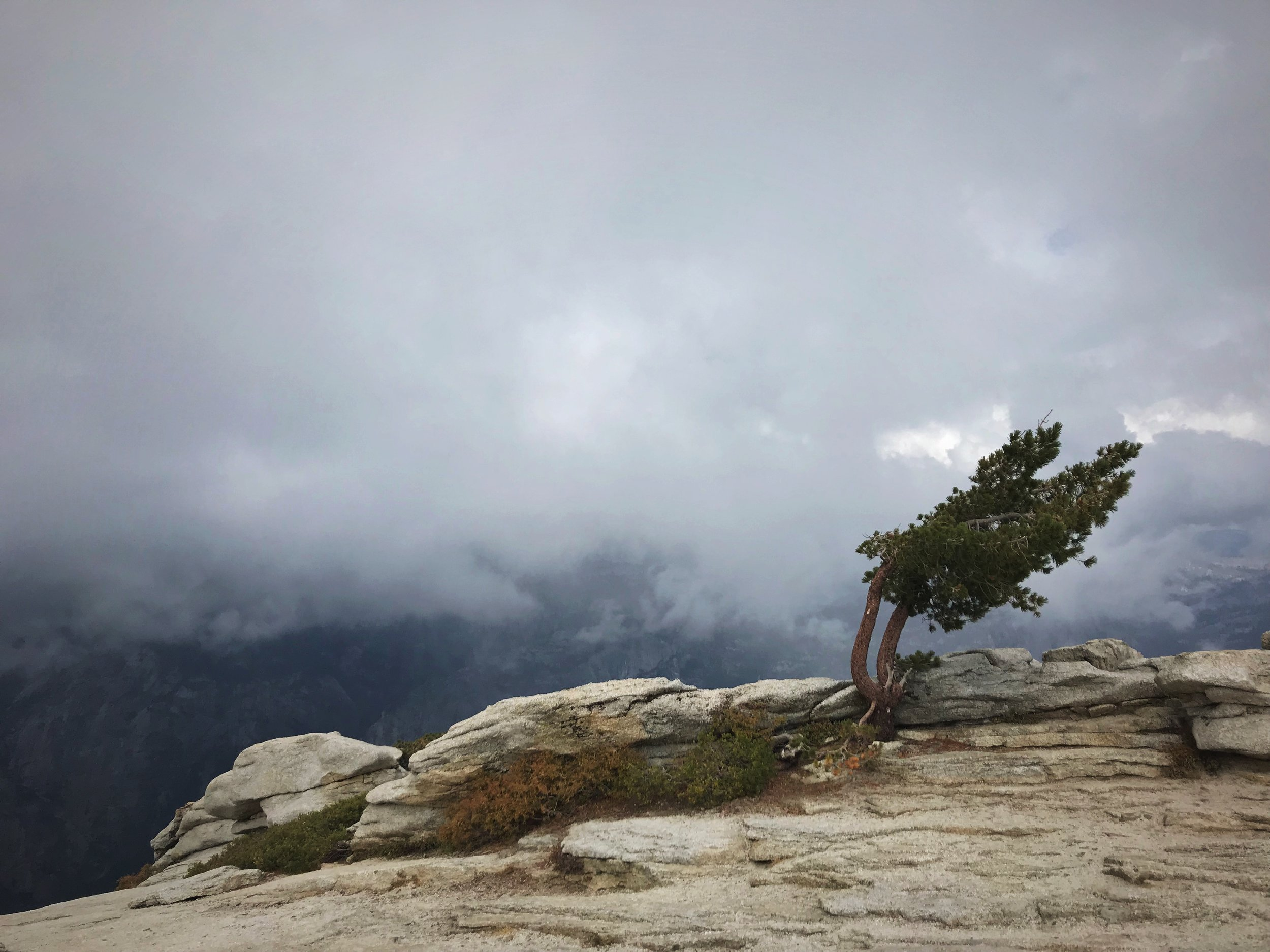 Another windblown pine on top of Sentinel Dome.
