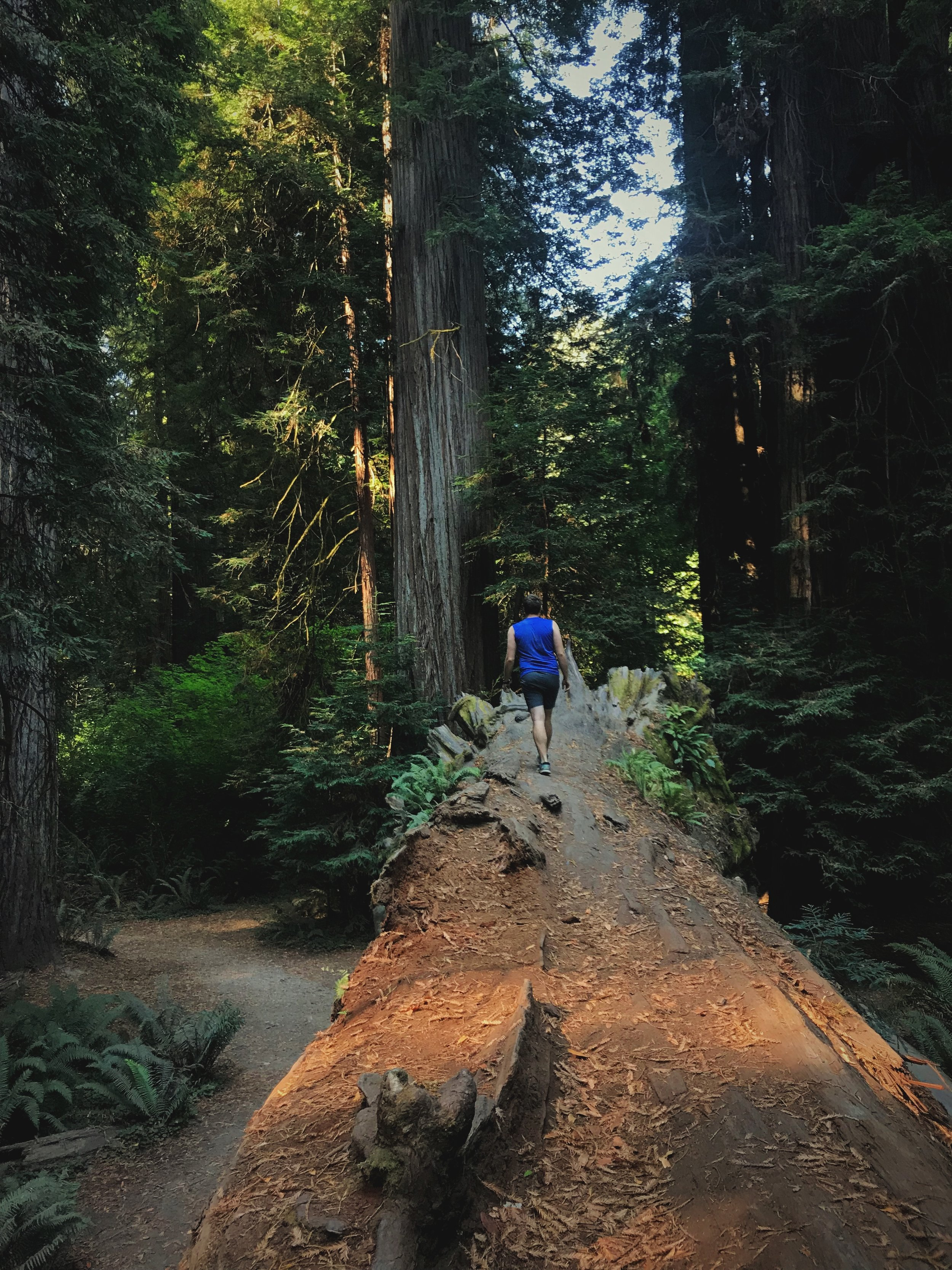 Ian walking along the length of a fallen tree.
