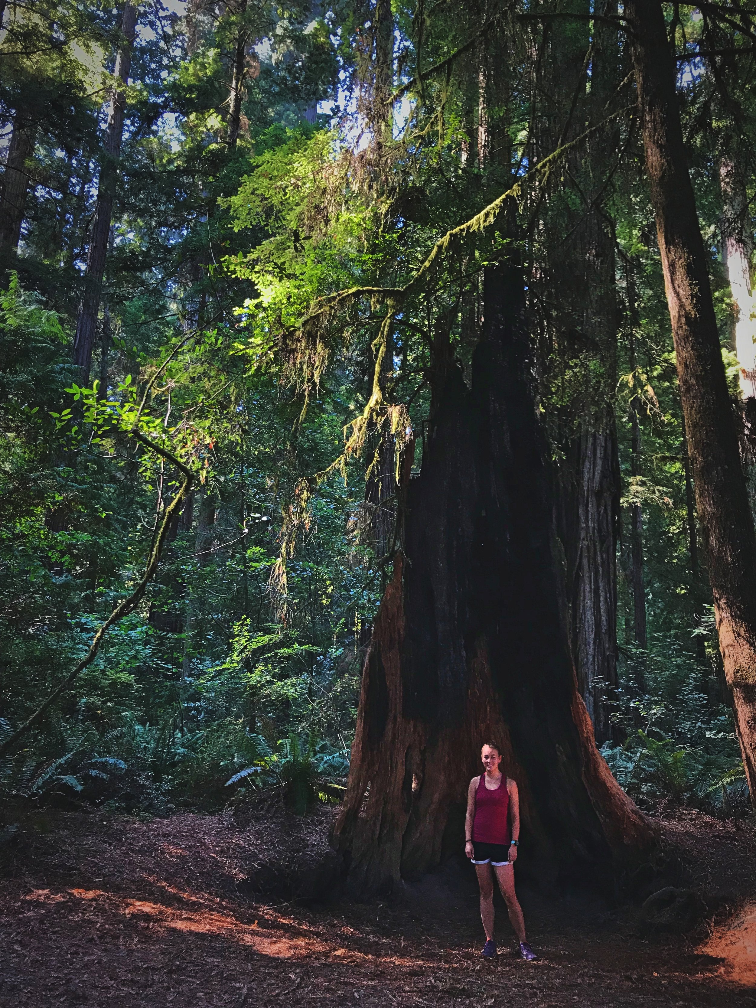 Throughout the Redwood Forest there are many burnt or partially burnt trees.