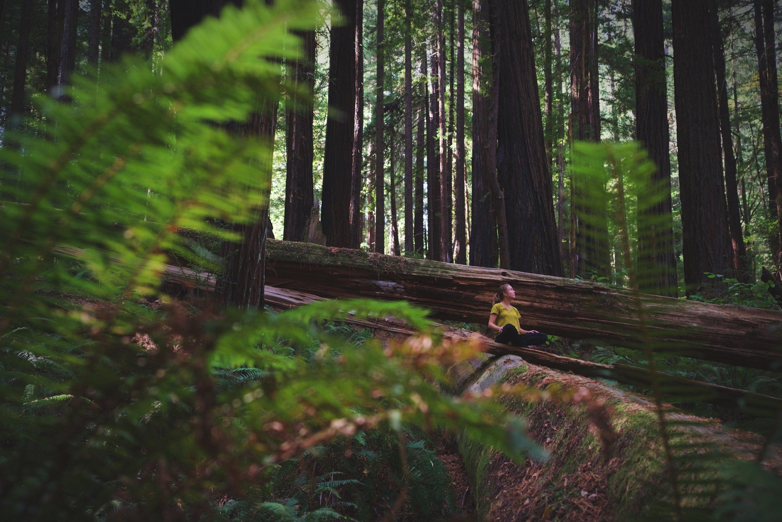 RedwoodForestYoga.jpg
