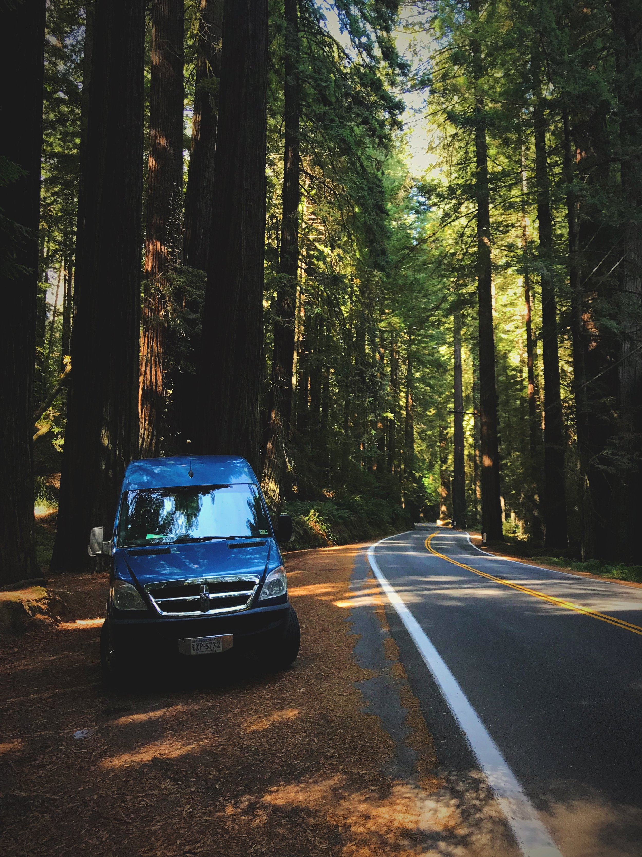 There are a lot of places to pull off along the Avenue of the Giants so you can explore the redwoods.