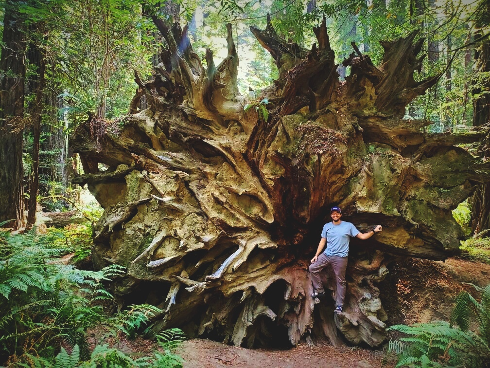 Ian standing in the root ball of a fallen giant in the Founders' Grove.