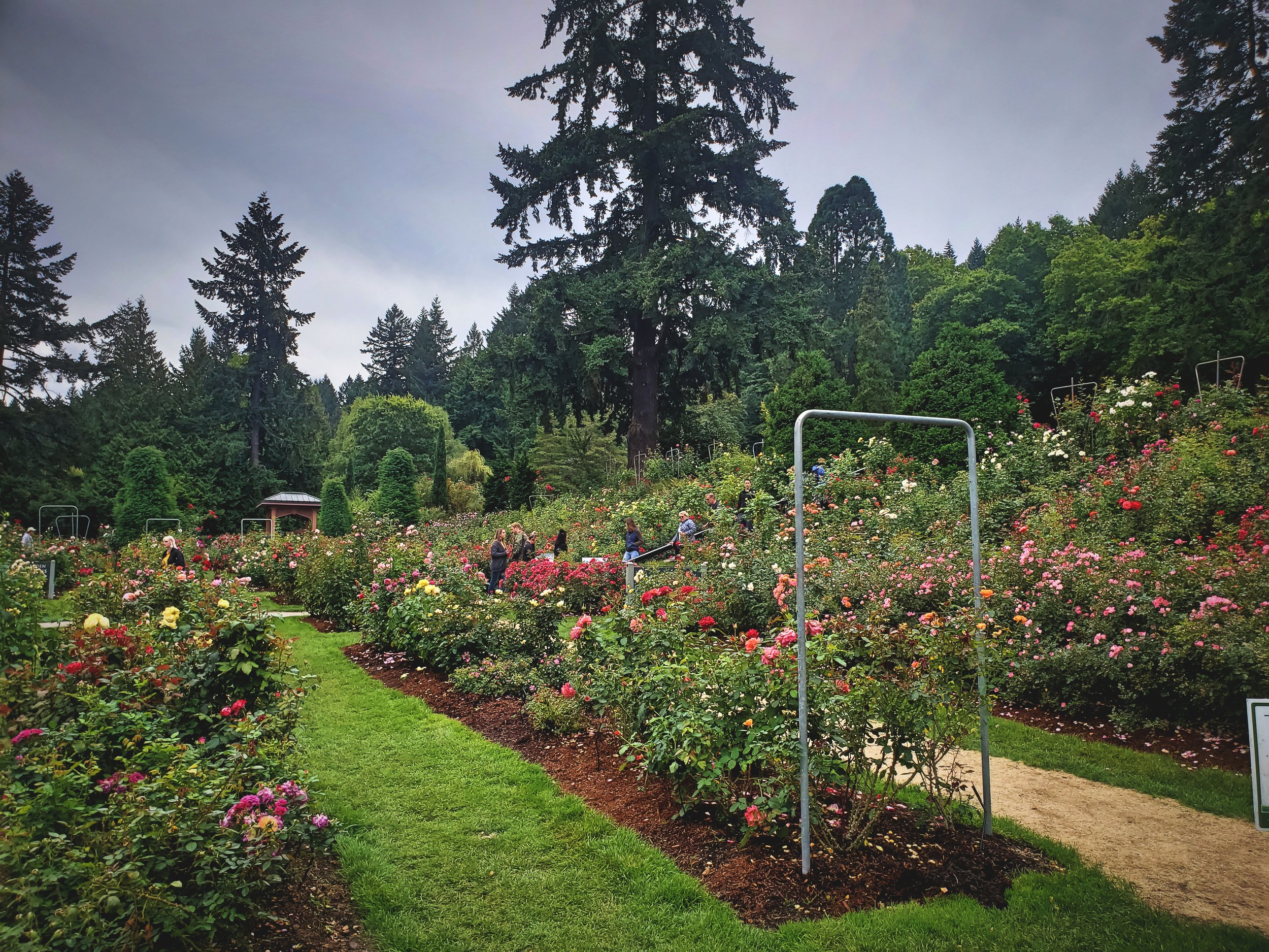 Many of the roses are in well-kept rows, but you'll find other climbing walls, gates, and trellises.