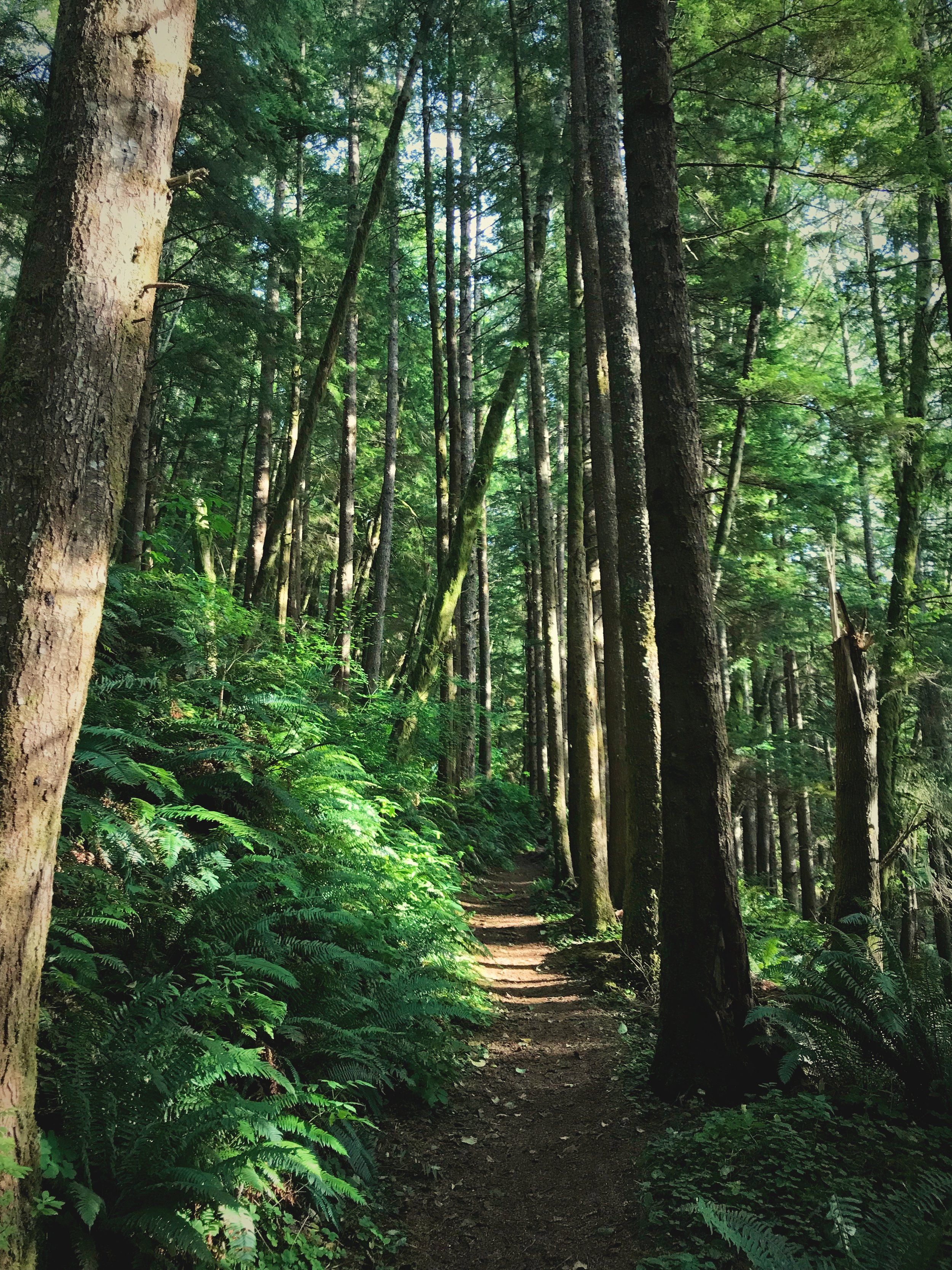 The Harts Cove trail goes through an area of coastal rain forest. It's got an great surface for running.