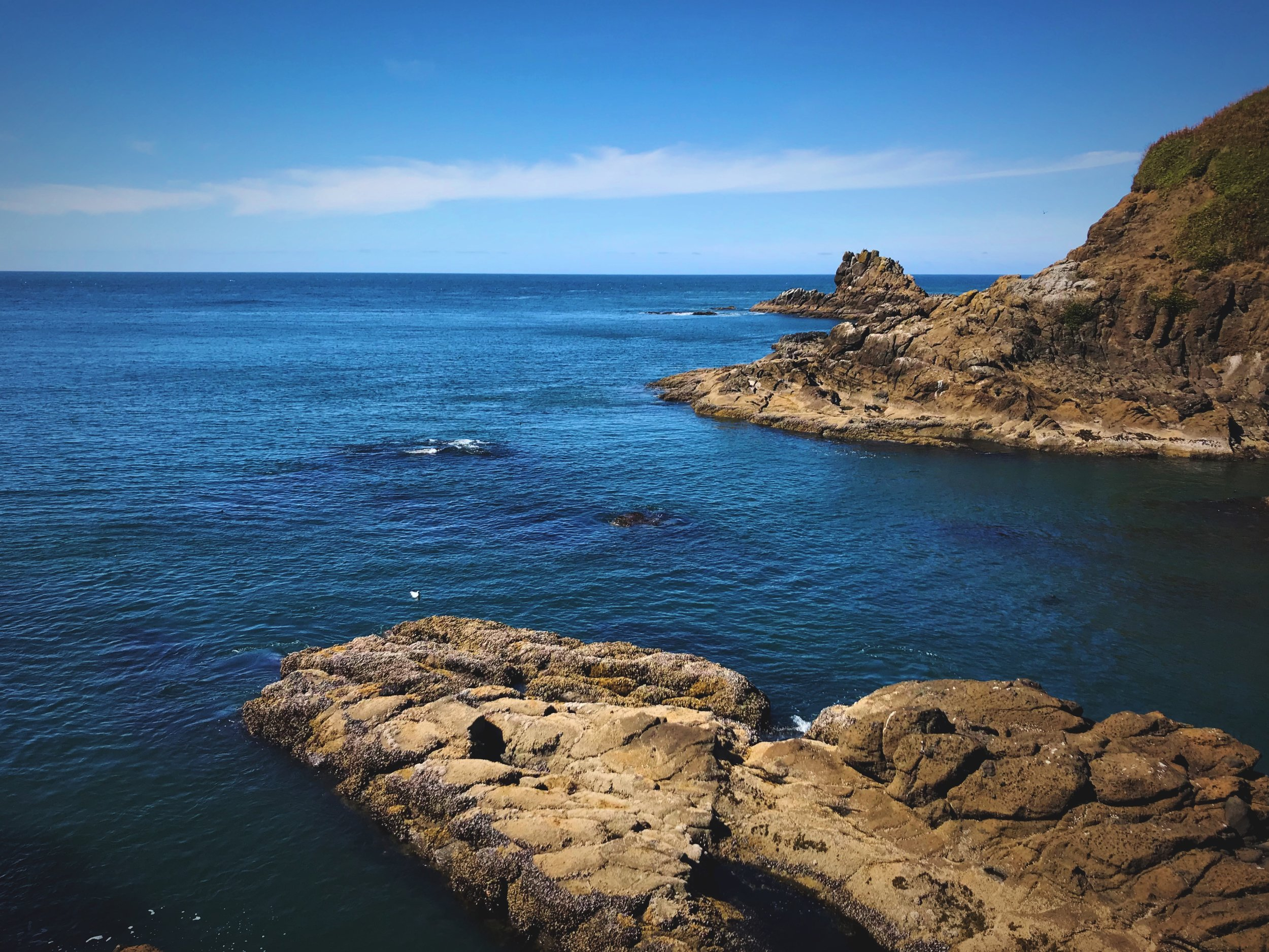 Bring your binoculars, from the rocks at Quarry Cove you can see Seal Rock with lots of marine mammals.