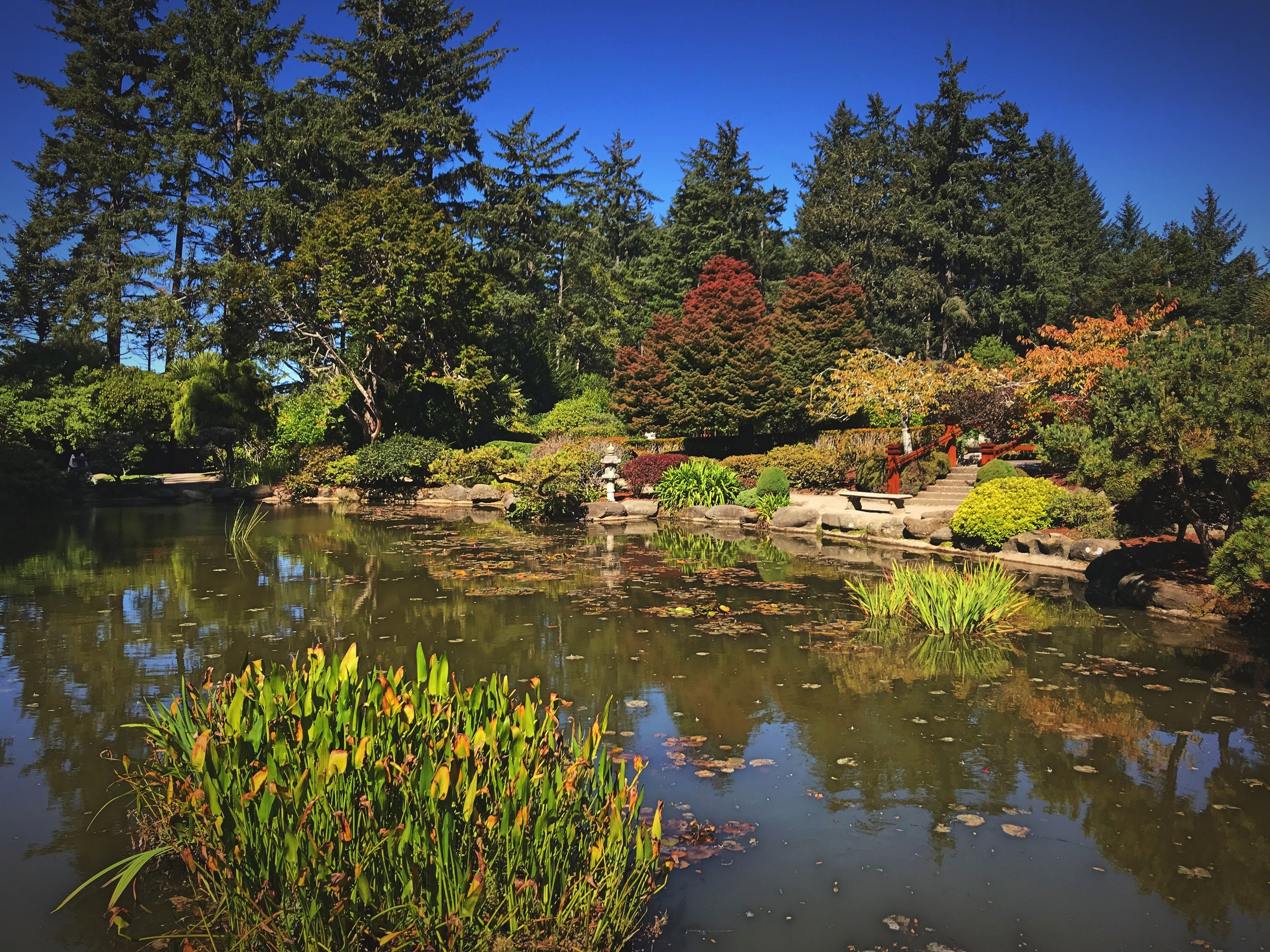 The Japanese Garden is as beautiful as the English rose gardens.