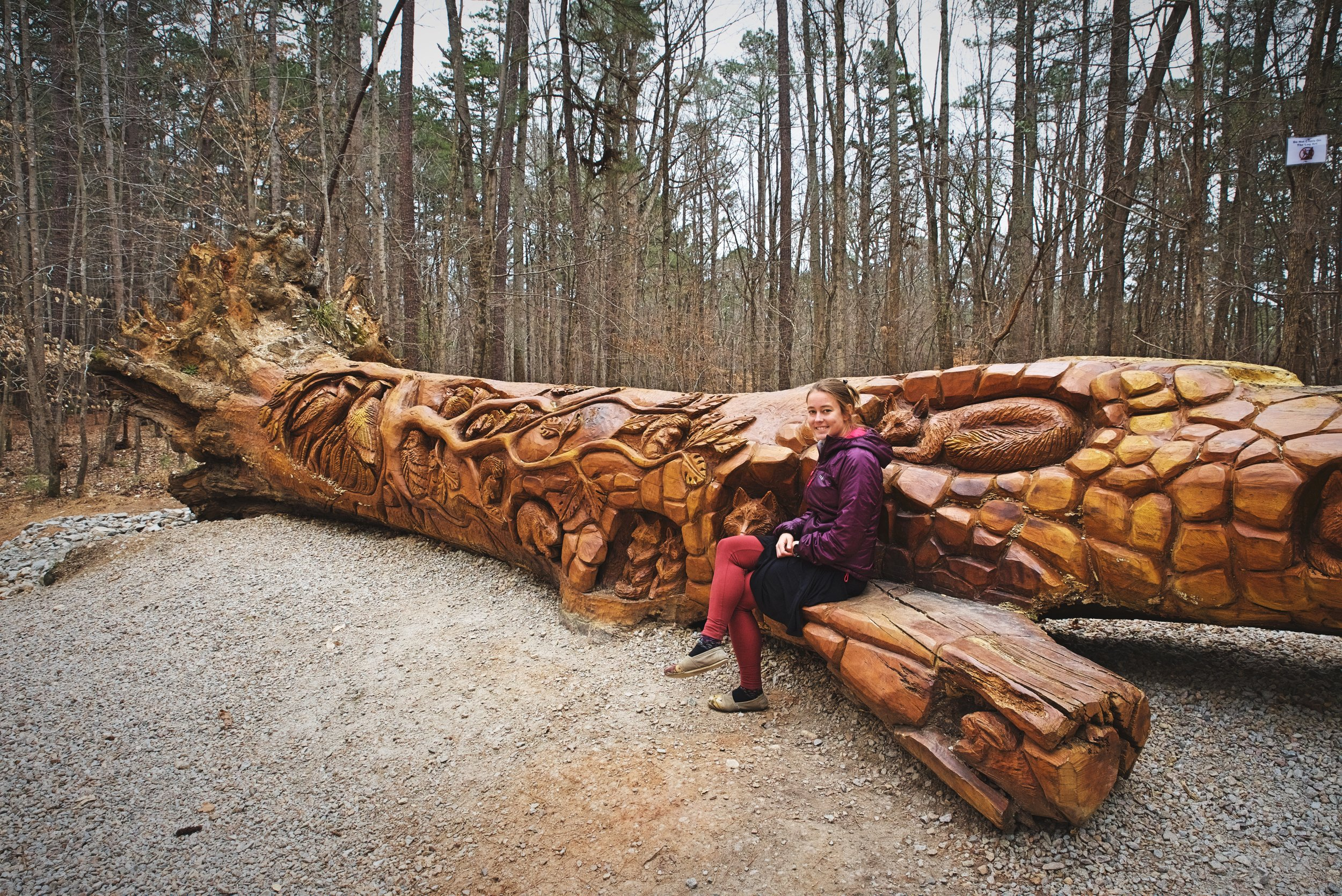 A branch of the tree has been carved into a bench, making a great place to take a photo.