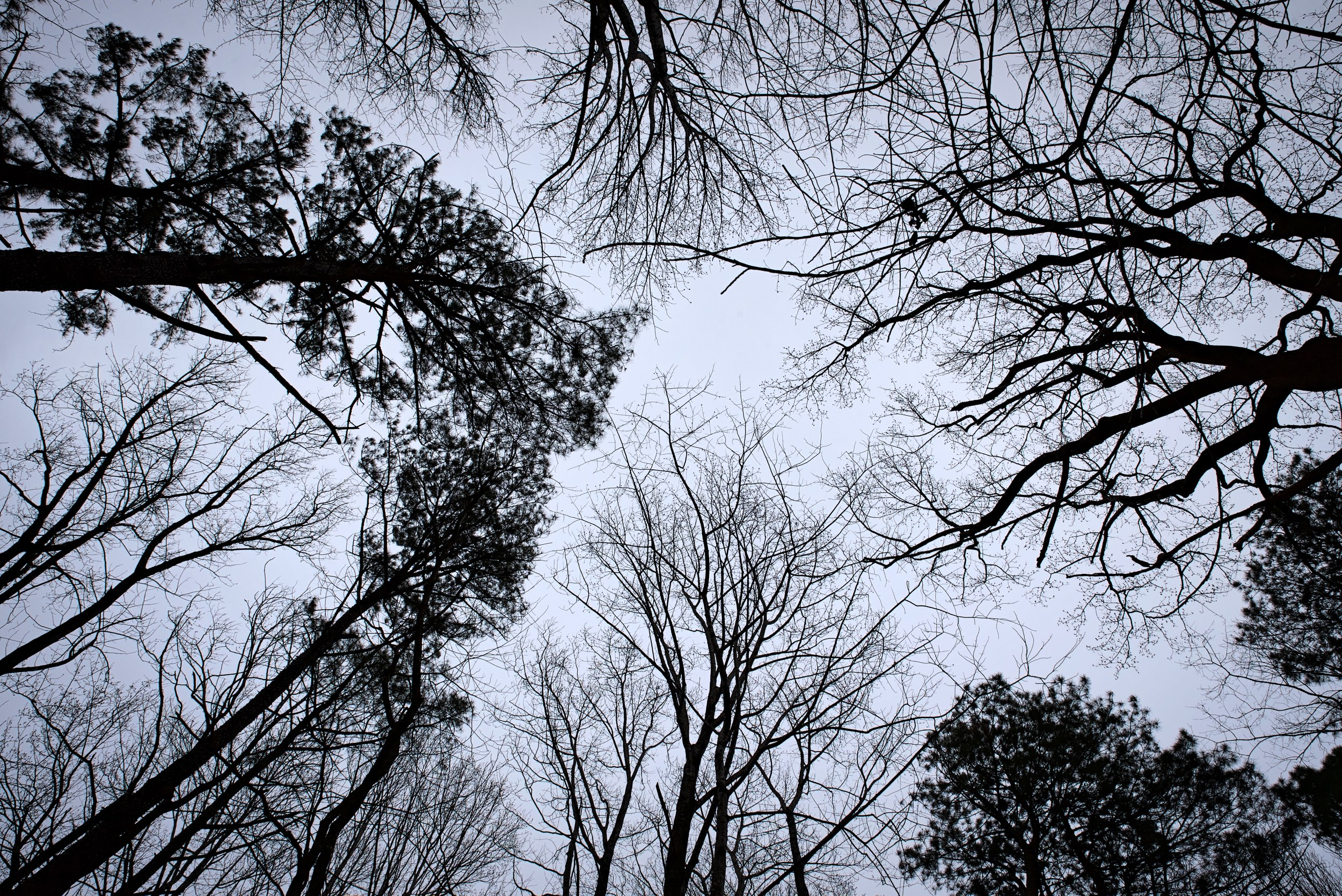Once you leave the Cloud Chamber for the Trees and Sky you can look up and see the trees that were projected in chamber.