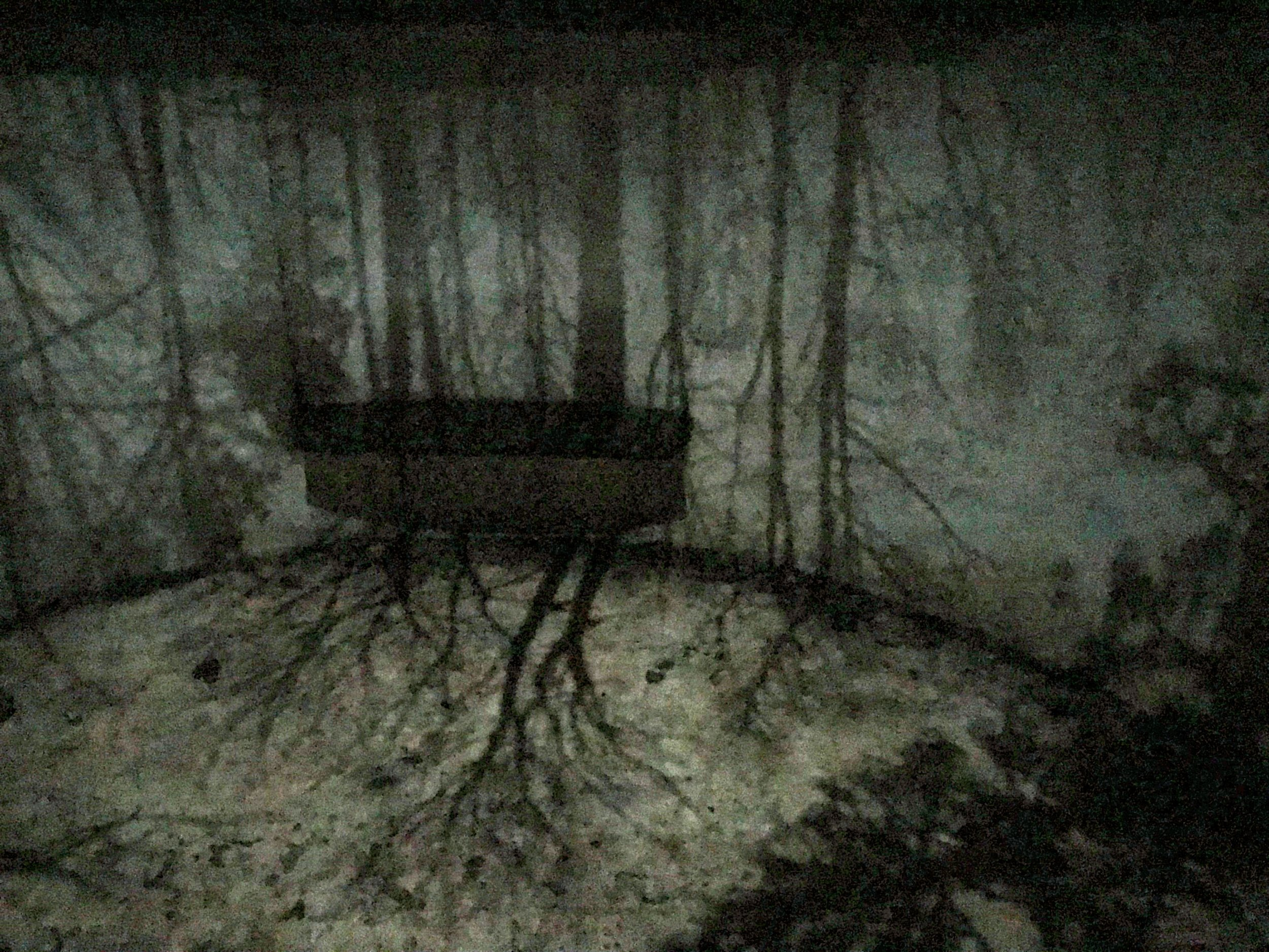 The camera projects an image of the trees on the walls around you.