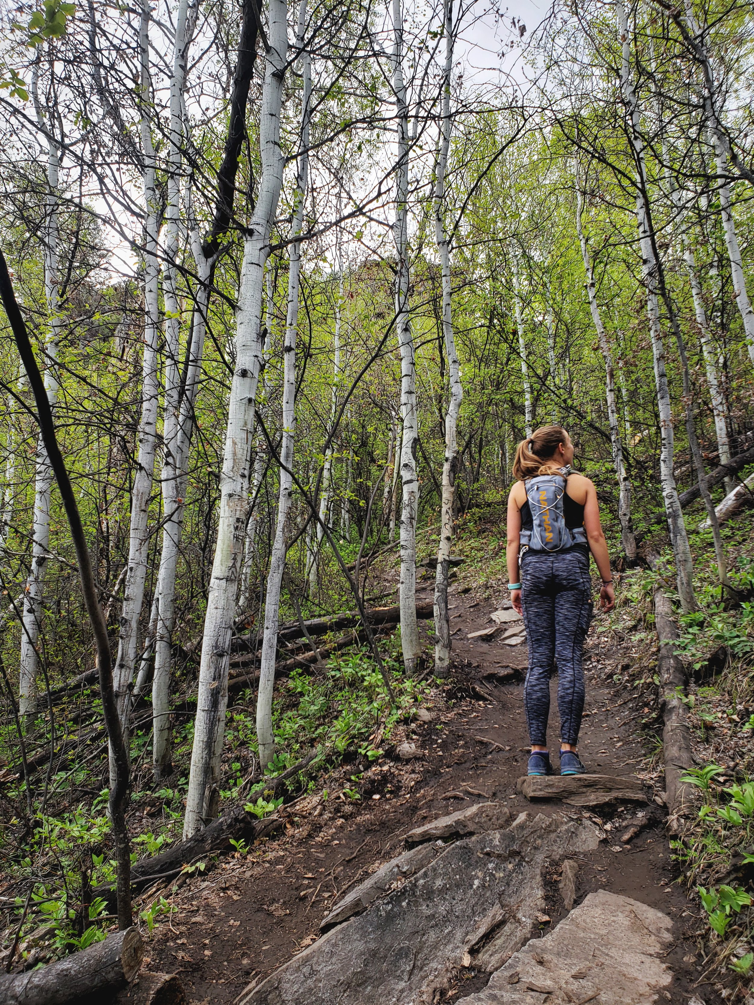 The first portion of the hike is on the Oak Flat Loop, which goes through a lush aspen grove.