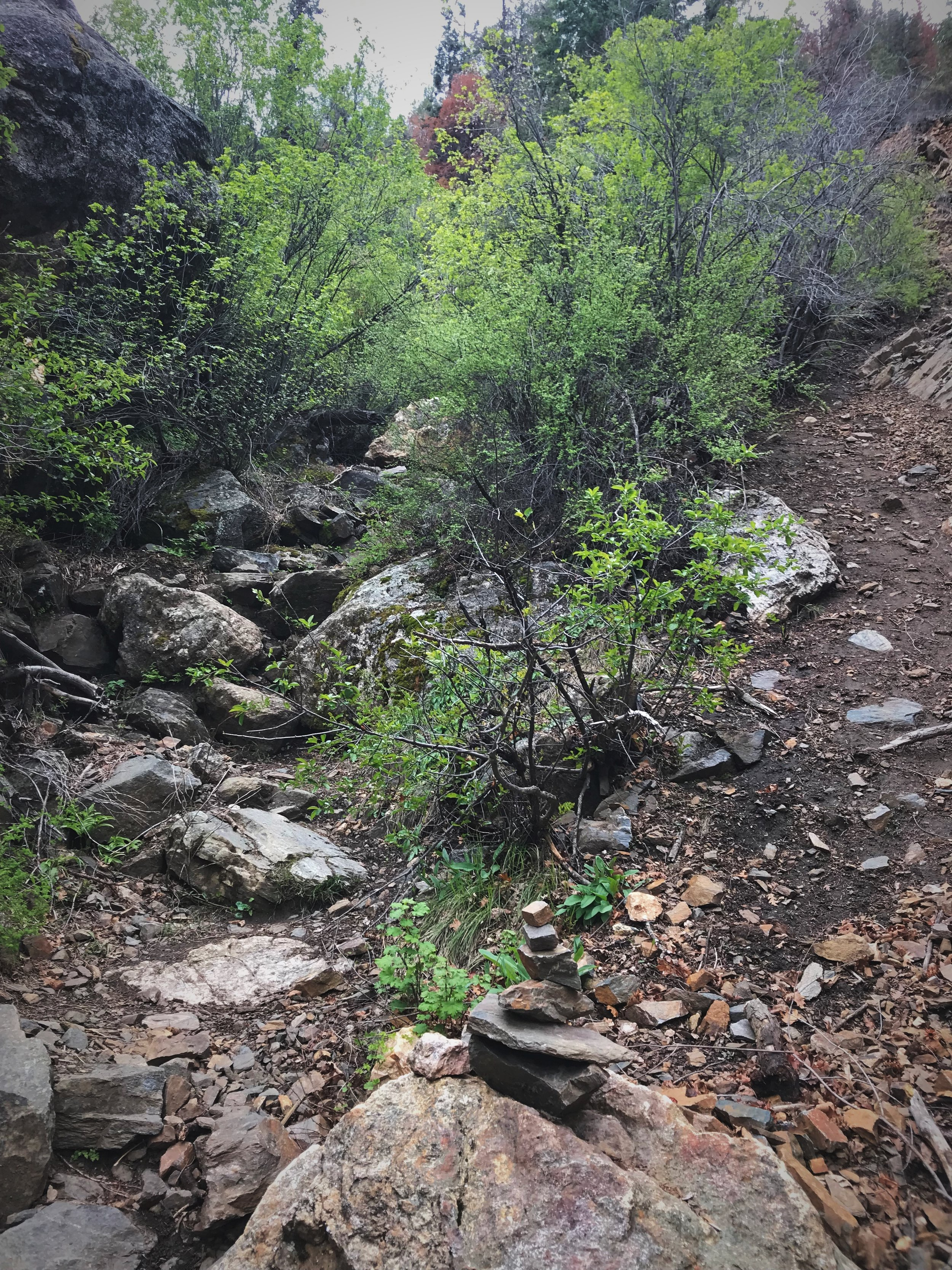 Cairns will lead you down the Gunnison Route, but there is no maintained trail down the canyon walls.