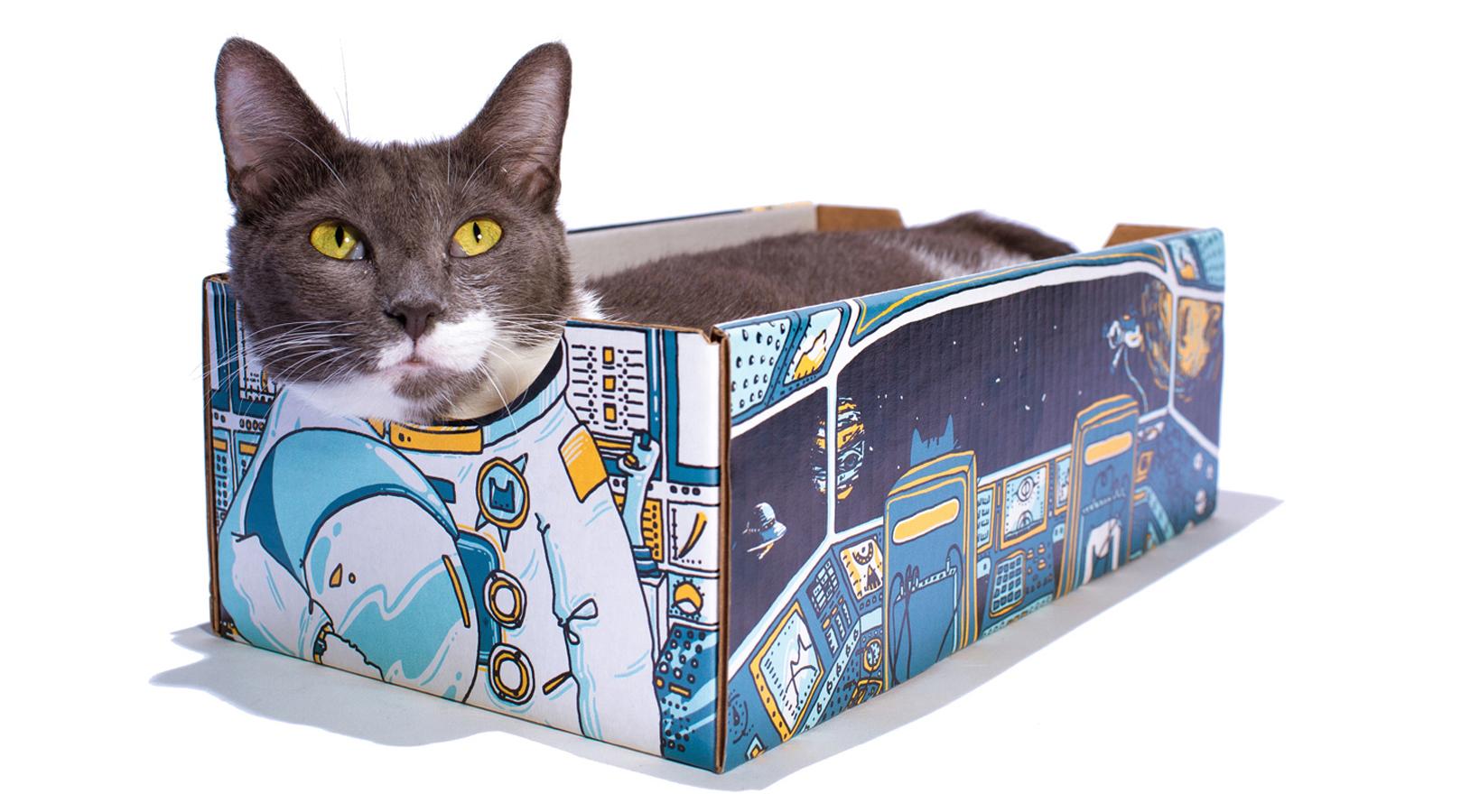 Catbox_ASTRObox_press release img 02.jpg