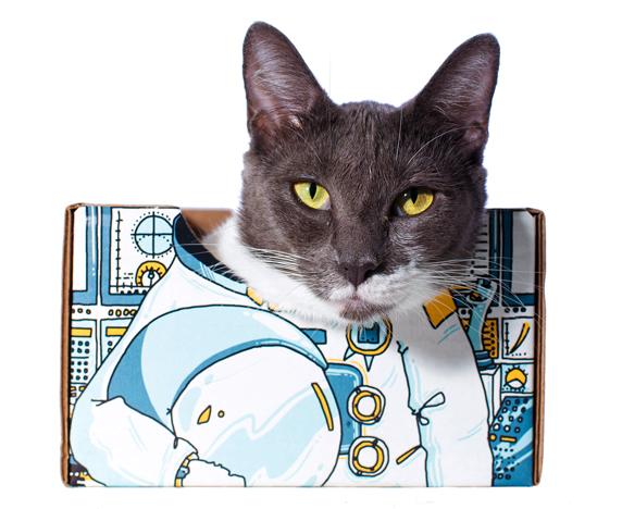 Catbox_ASTRObox_press release img 01.jpg