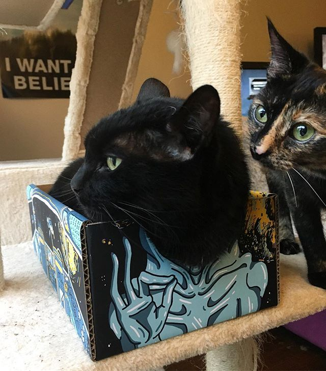 Pssst, hey, mom said it's my turn. *ignored* ___________ #catboxworld #sharingiscaring #catsdontshare #meowed #catofday #cutecatpic #blackcat #spacecat #aliencat #adorably #catsinboxes #catbox @carlandterrance