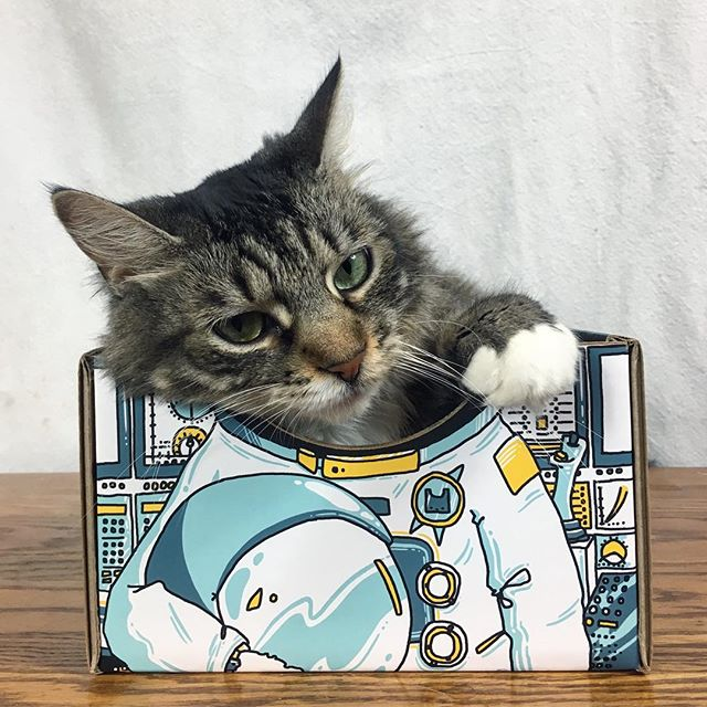 When duty calls but you have a case of the Monday's. • • • #catboxworld #mondaymood #caseofthemondays #catsofinstagram #meowed #adorably #cutecat #catsinboxes #catbed #catproduct #buzzfeedanimals #9gag #catsronaut #catsinspace #spacecat #ilovemycat
