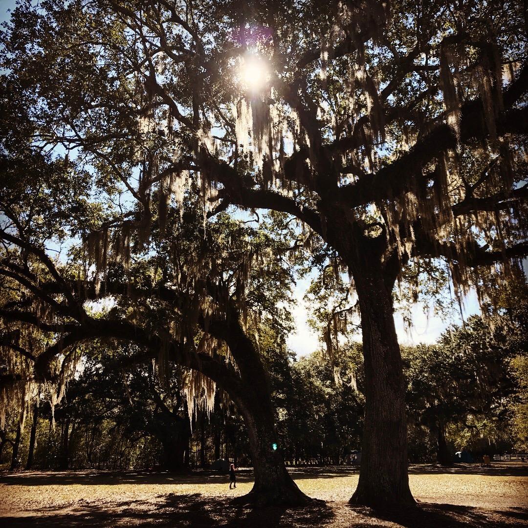 Louisiana7.jpg