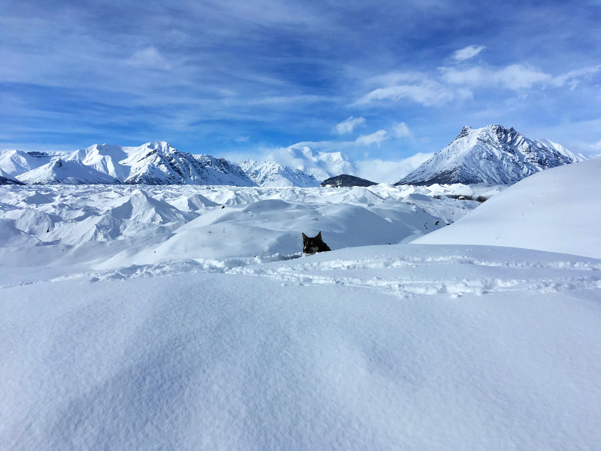 Benny, my dog, laying in the snow on the east side of the Kennicott Glacier with Mount Blackburn and Donoho Peak in the background.