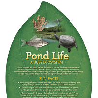 Fun-Facts-Sign-Pond-Life-square.png