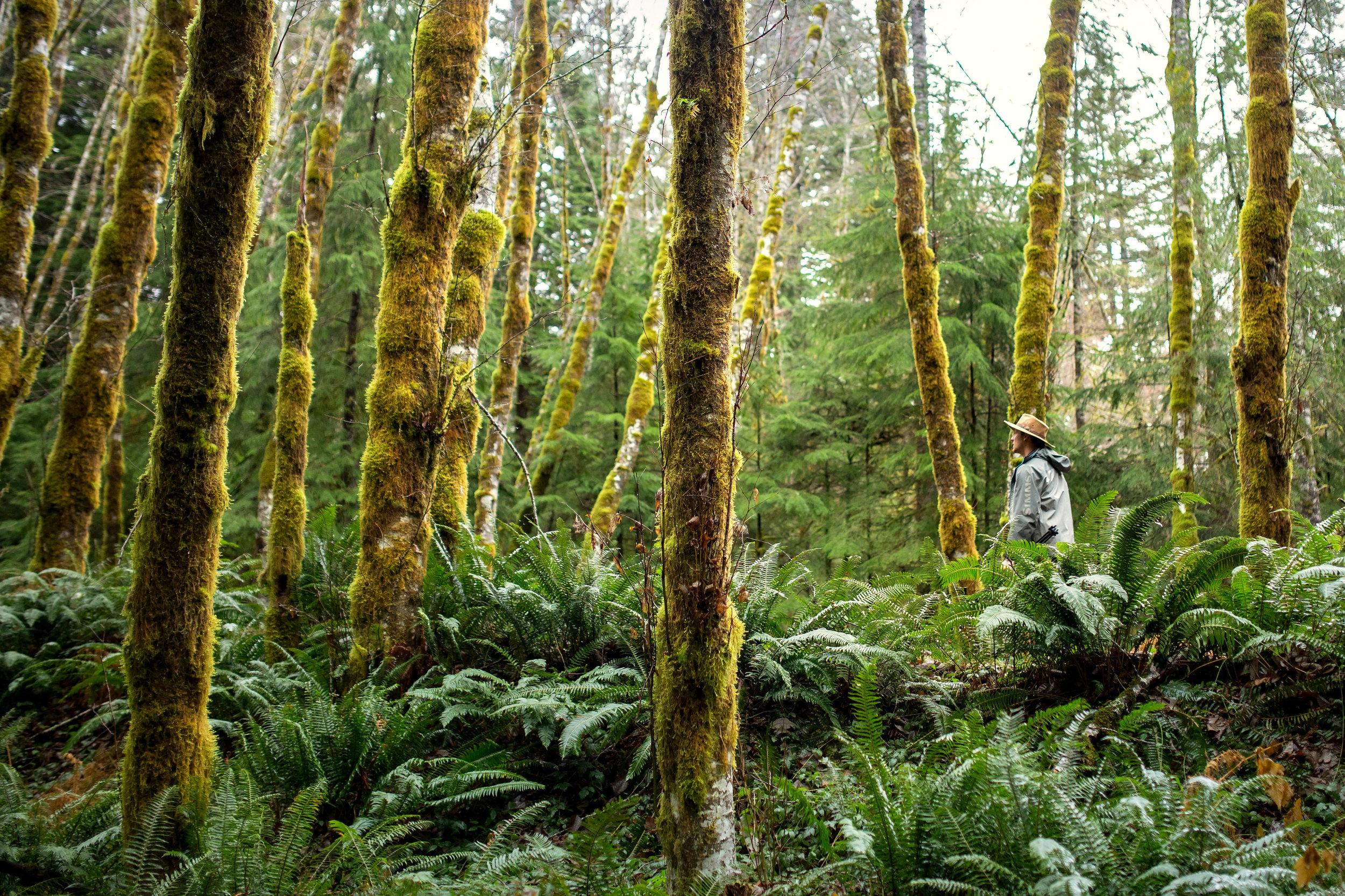 PNW-Ferns-SAved-for-Web-dkje.jpg