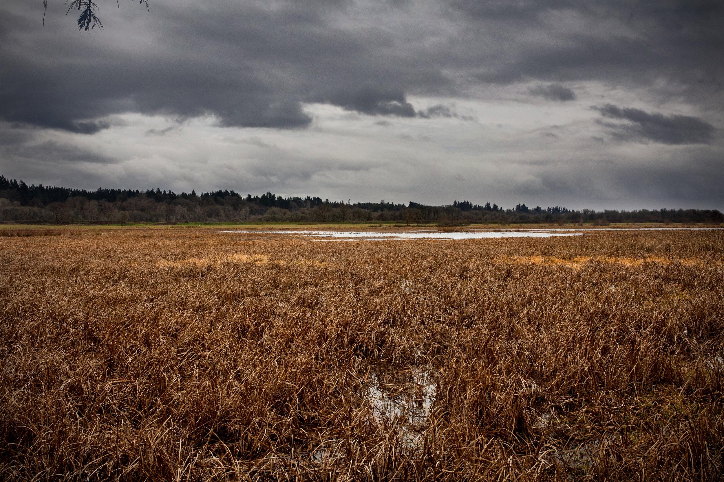 Marsh-Sky-Saved-for-Web-kdj.jpg